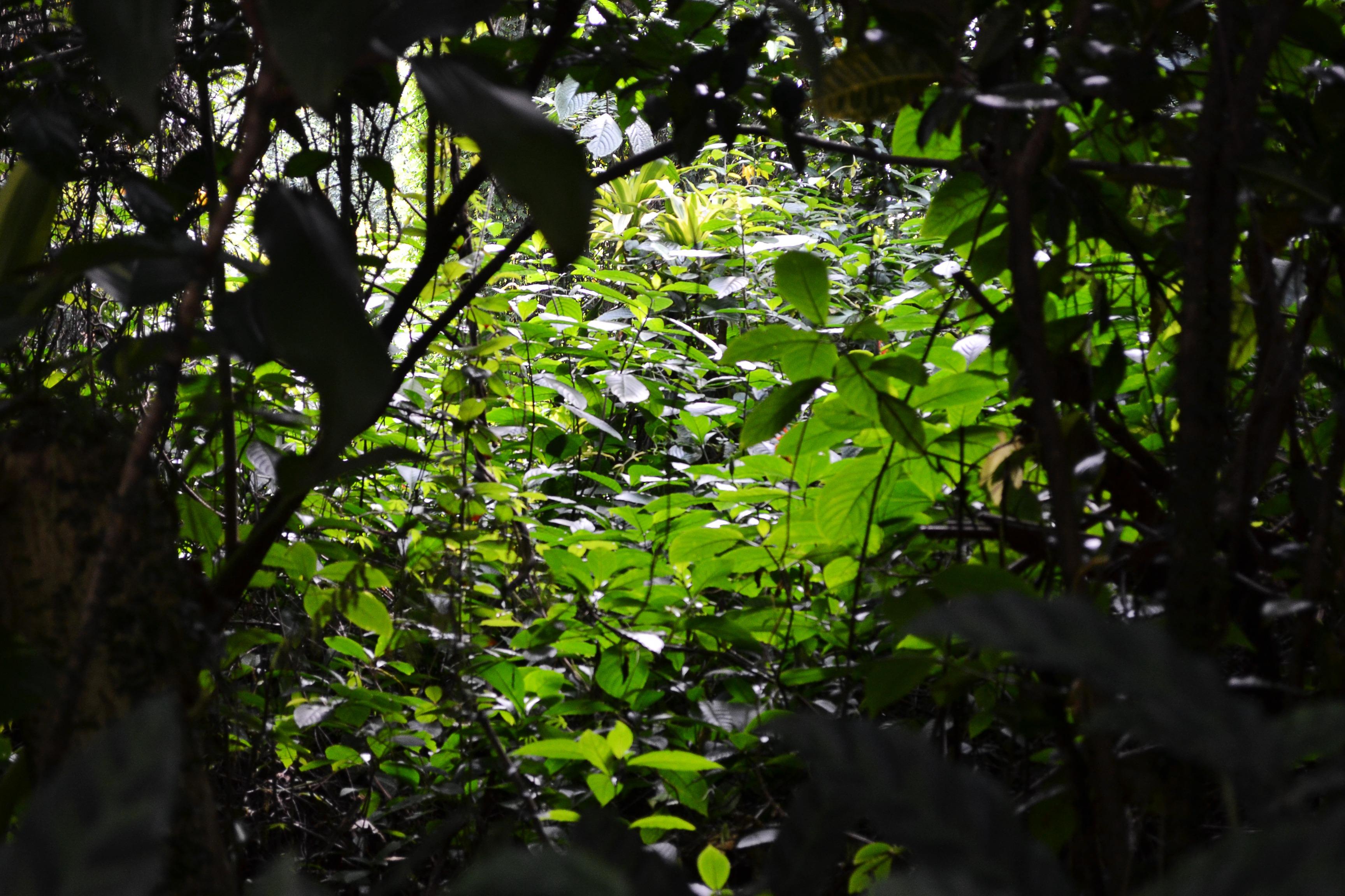 Dark Green Jungle | www.imgkid.com - The Image Kid Has It!