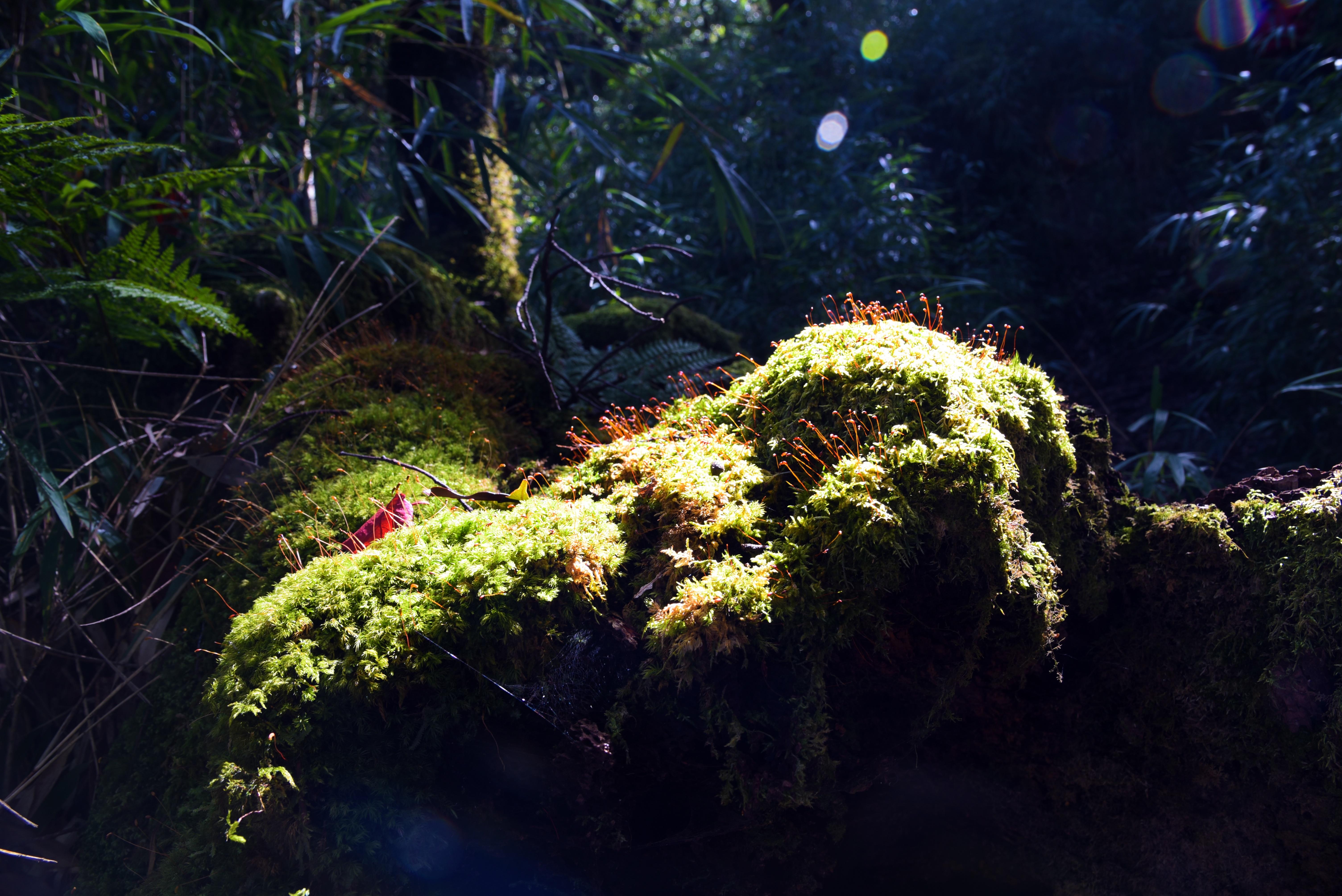 aquarium sonnenlicht