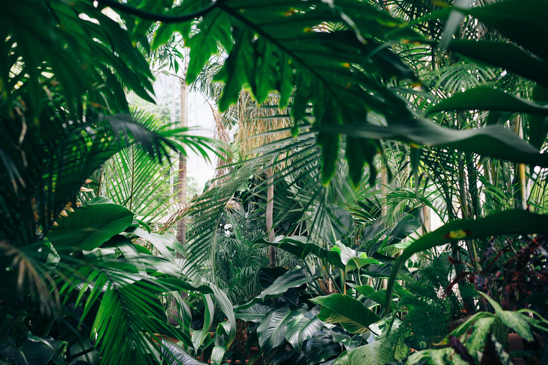 картинка тропического леса с цветами леса известность получила будучи