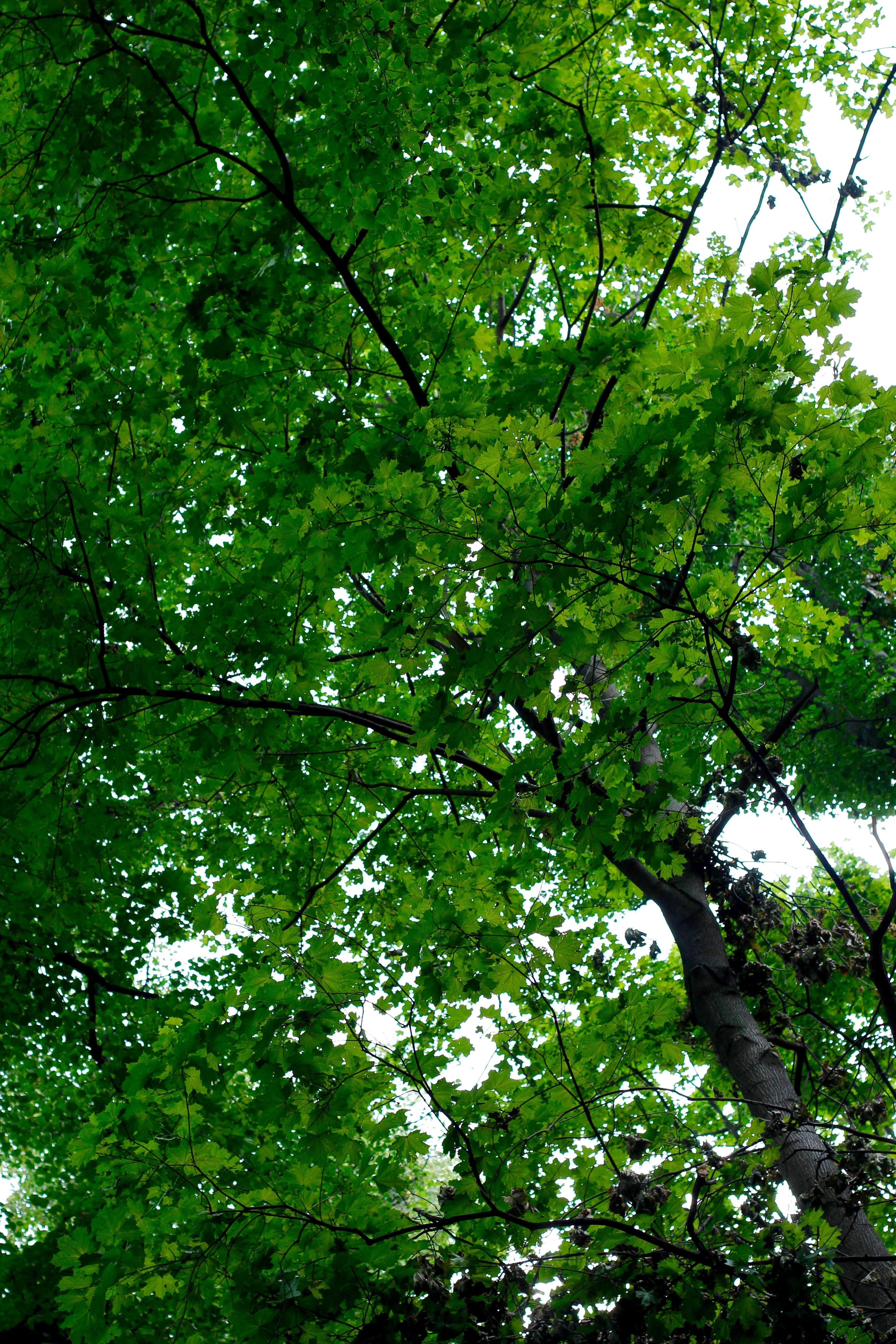 Free Images Tree Nature Branch Sunlight Leaf Flower