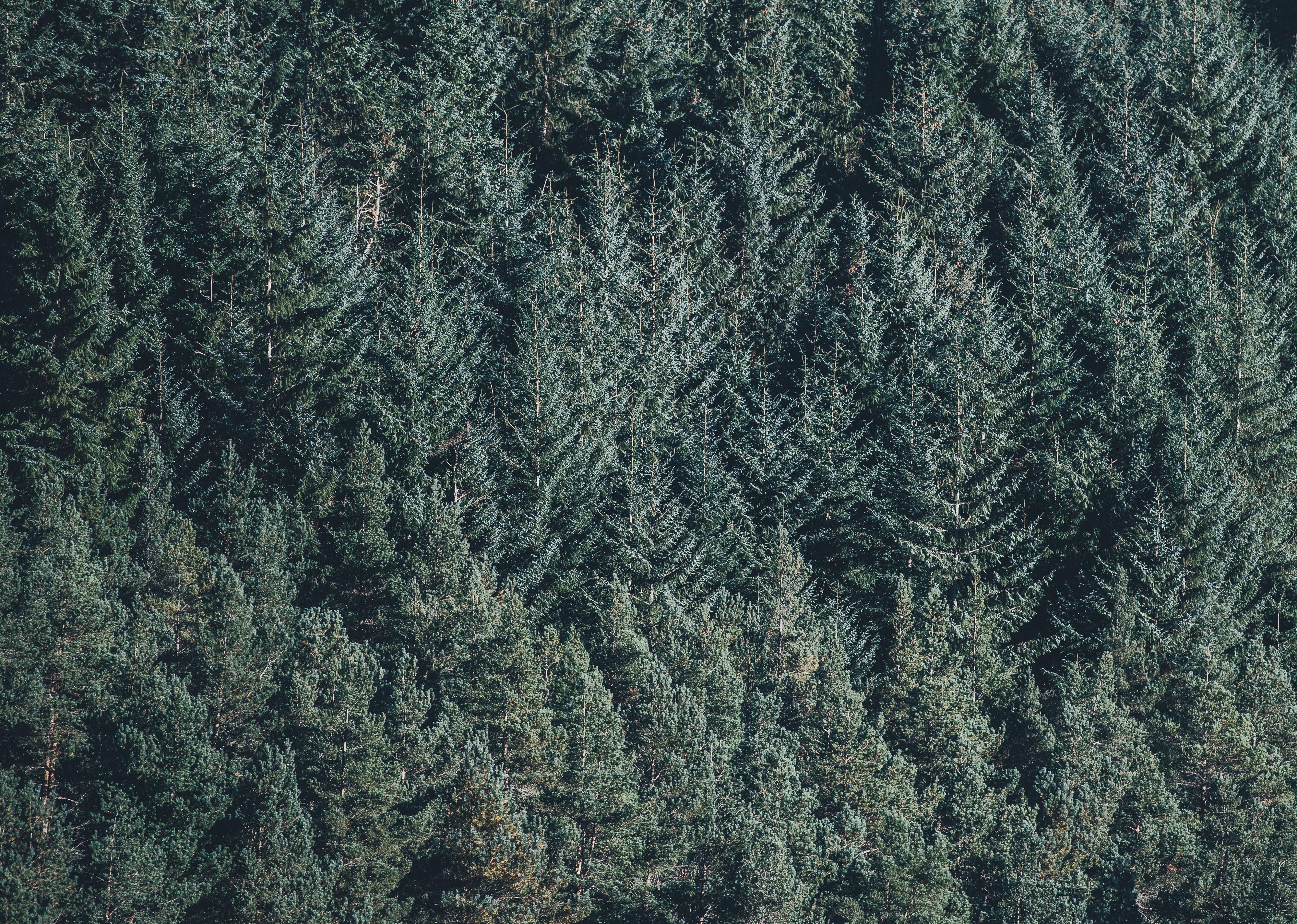 Images Gratuites Arbre La Nature Foret Branche Plante Texture Feuille Gel Environnement Vert A Feuilles Persistantes Sapin Conifere Les Bois Epicea Coniferes Fond D Ecran Habitat Ecosysteme Pins Biome Sapins Plante Ligneuse