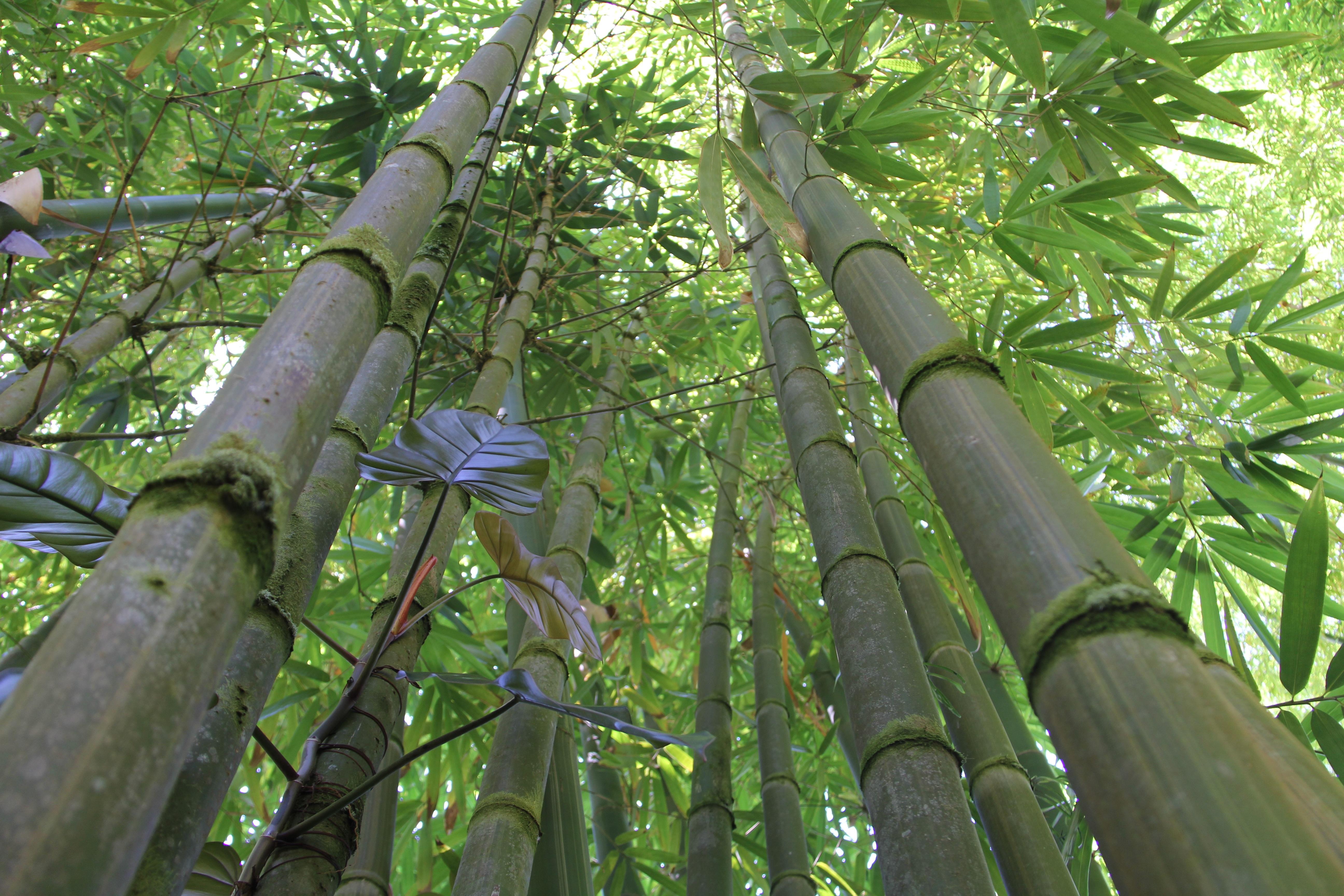 Bildet Tre Natur Gren Anlegg Stamme Gronn Jungel Tropisk