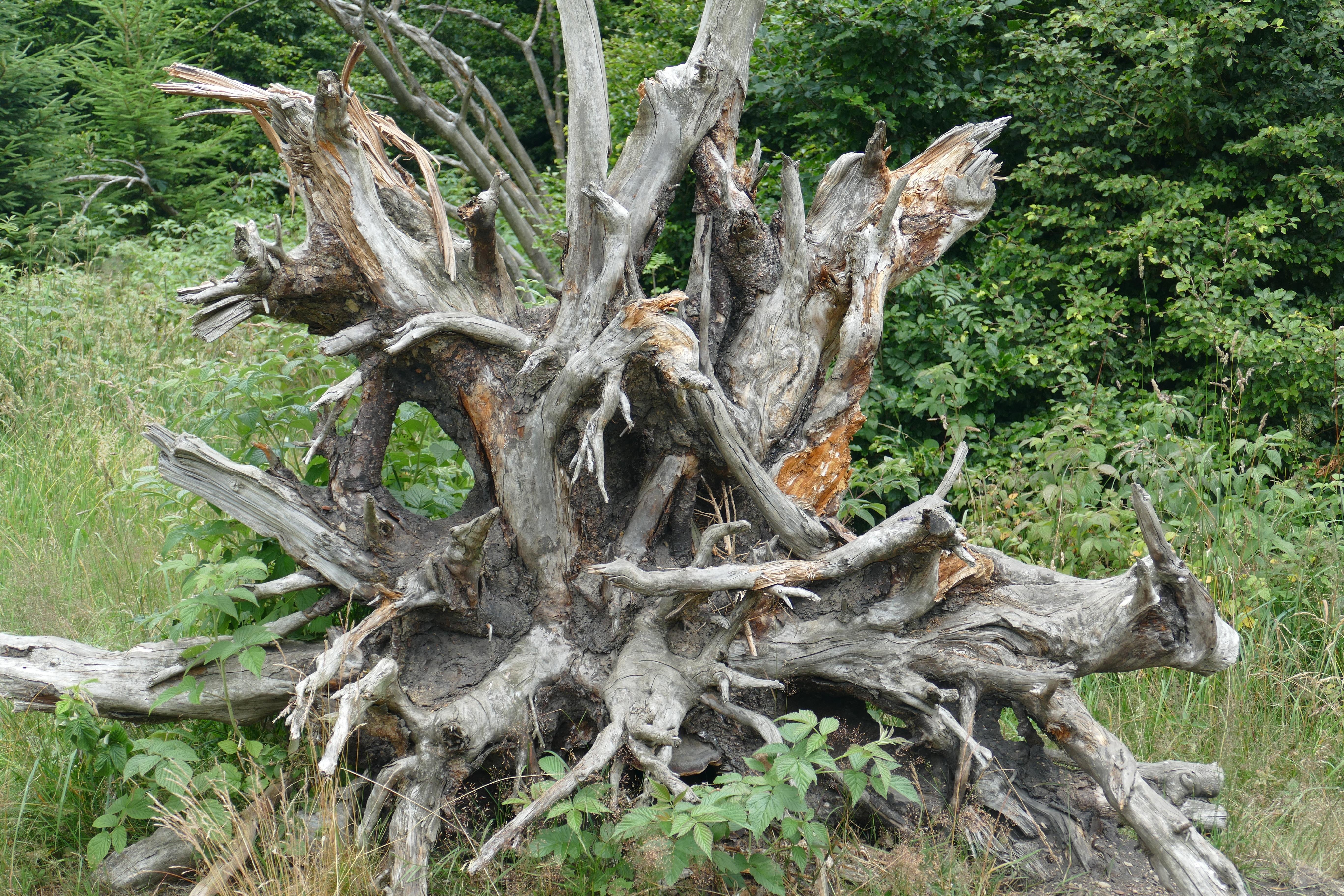 Gambar Pohon Alam Hutan Cabang Menanam Bagasi Akar Besar