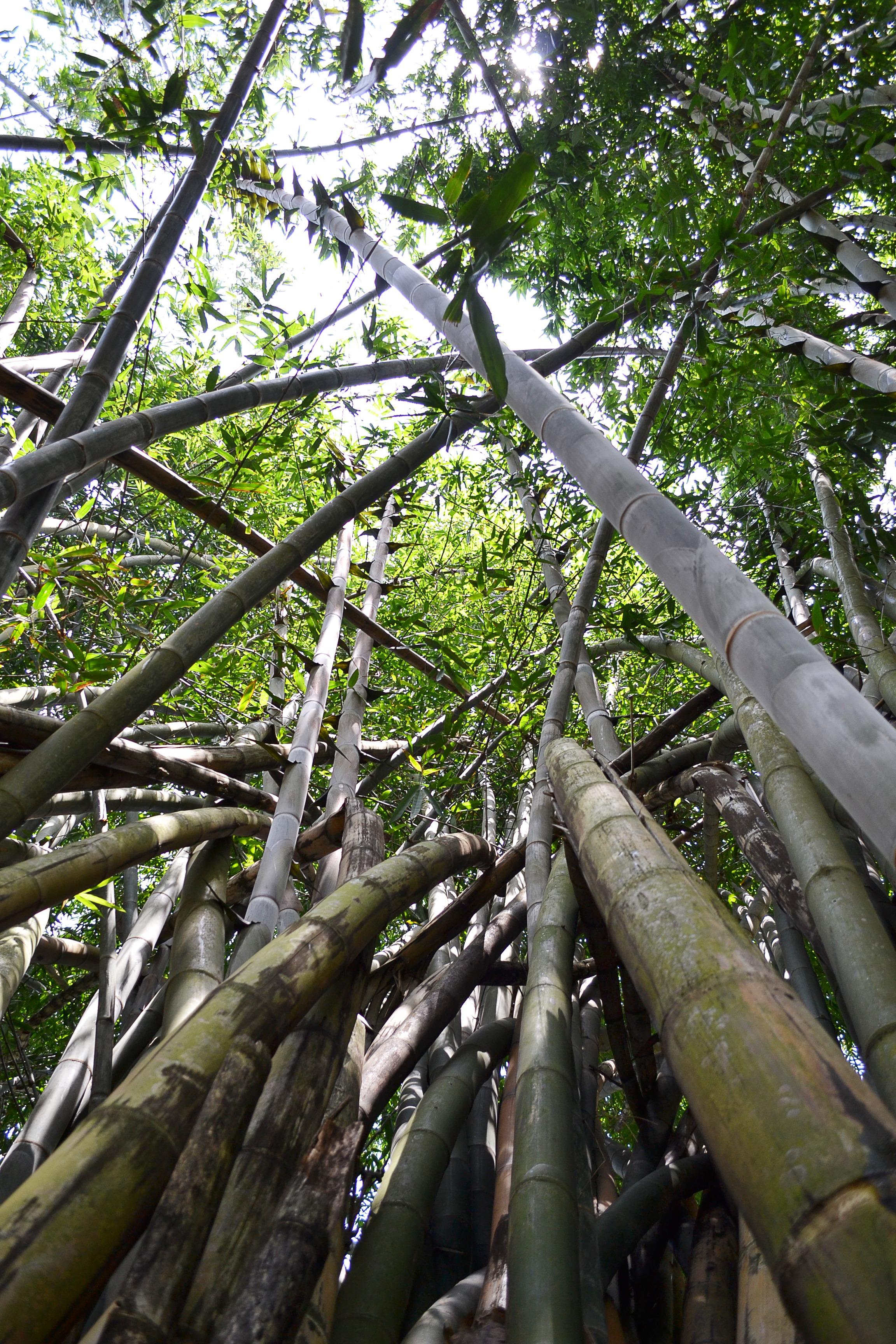 images gratuites arbre la nature branche plante. Black Bedroom Furniture Sets. Home Design Ideas