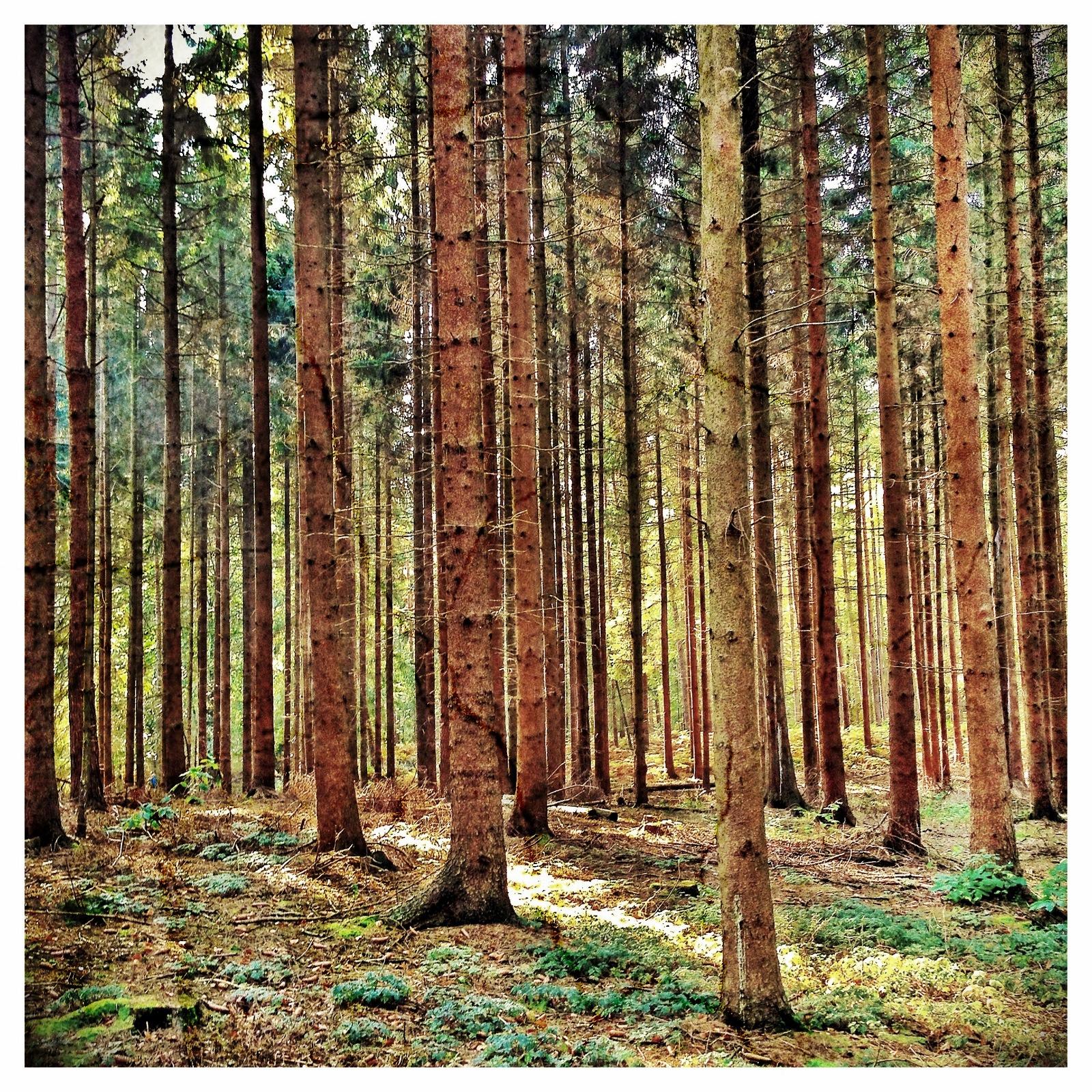 Images gratuites arbre la nature branche prairie - Tronc bouleau ...