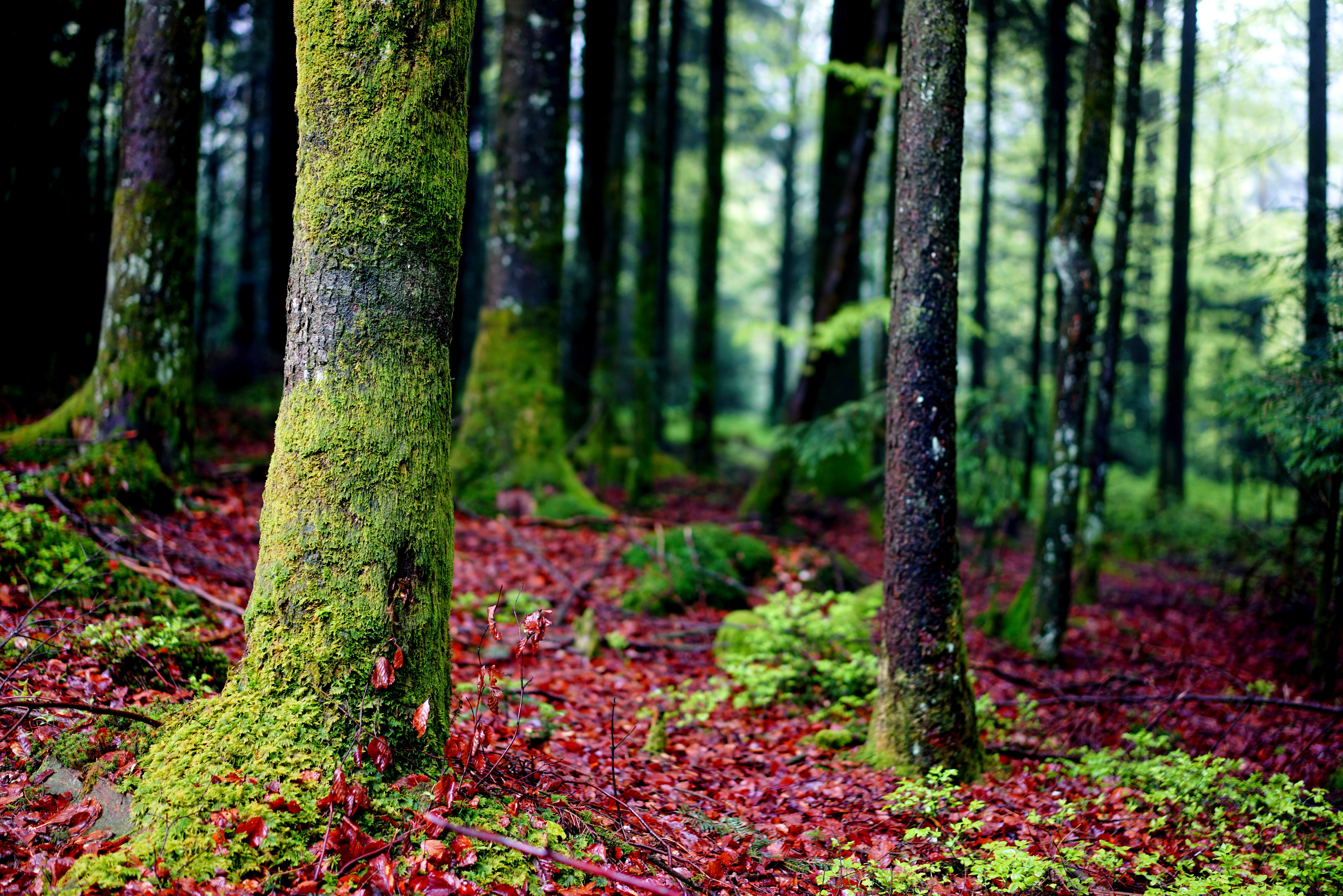 Free Images : nature, wood, sunlight, leaf, flower, moss, green ...