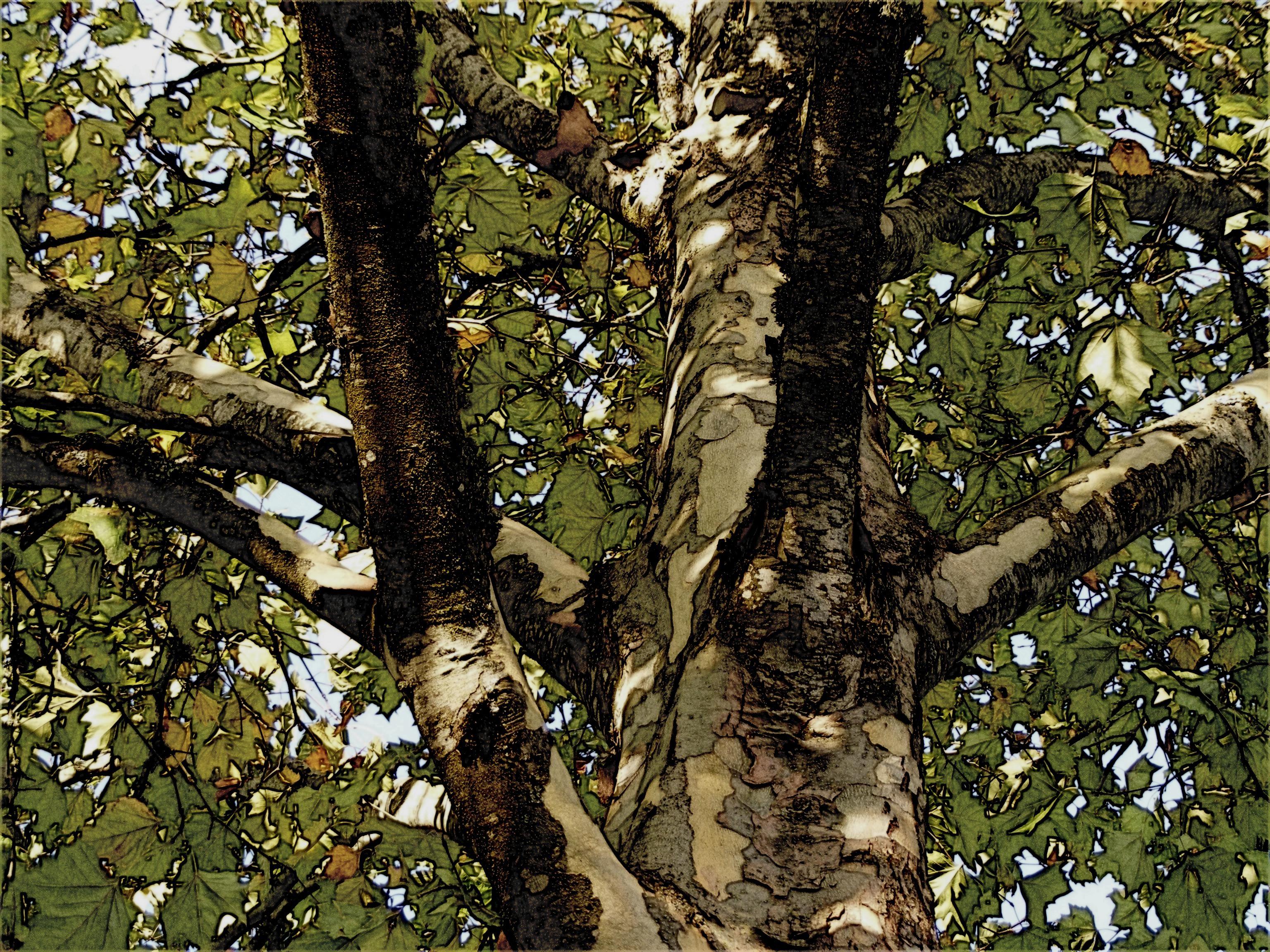 images gratuites : arbre, la nature, forêt, branche, lumière du
