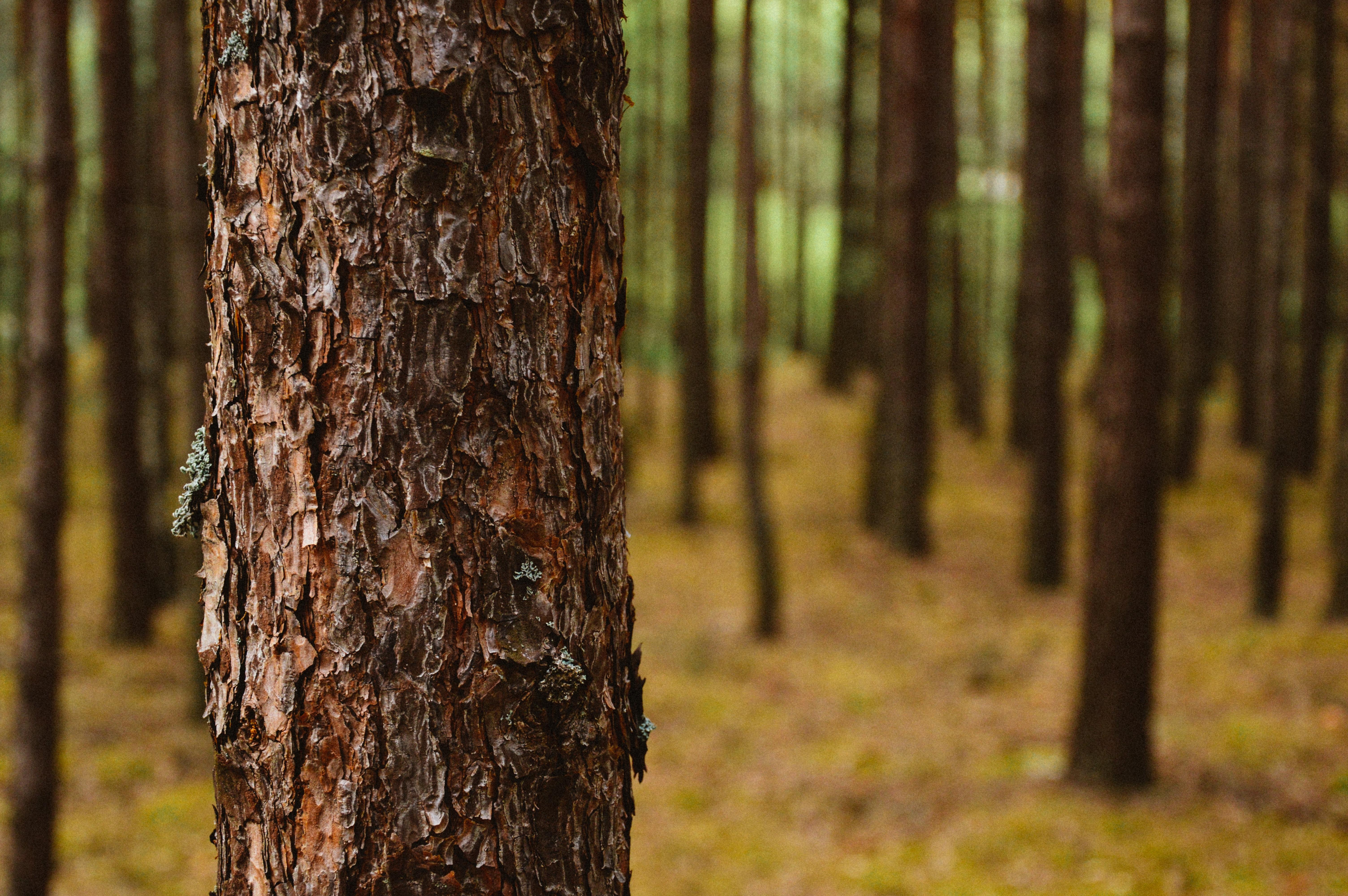 Fotos Gratis 225 Rbol Naturaleza Bosque Rama Madera