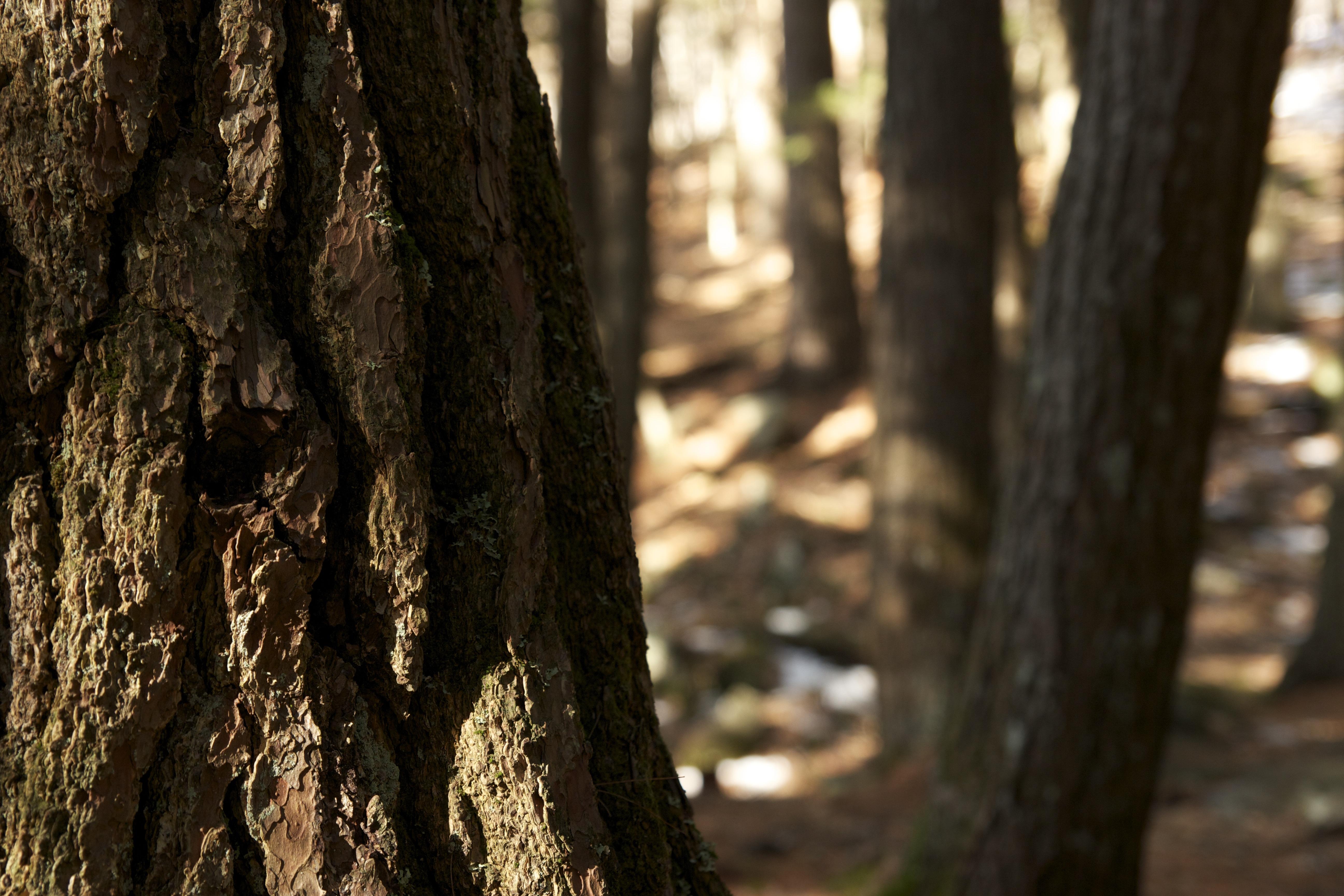 предлагаю вместе картинка про деревьев вблизи балки качестве перекрытия