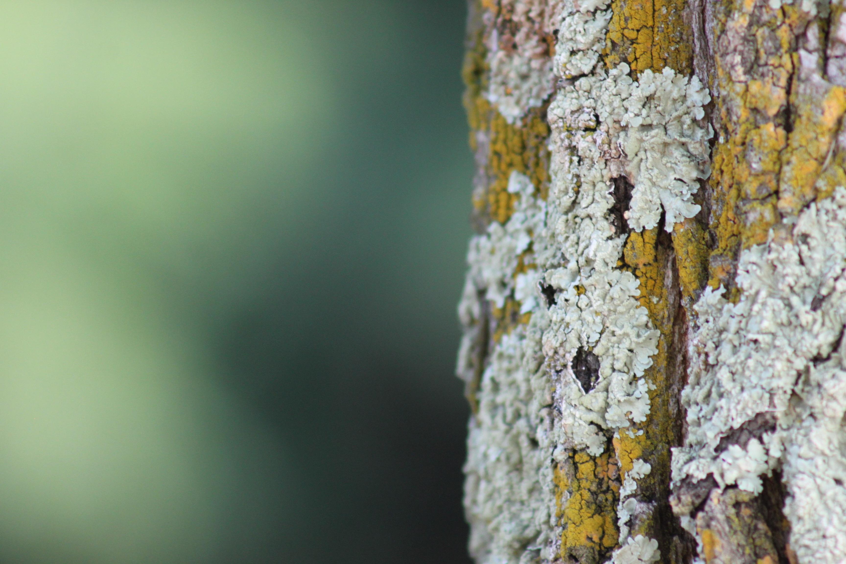 Fotos Gratis Naturaleza Rama Madera Textura Hoja