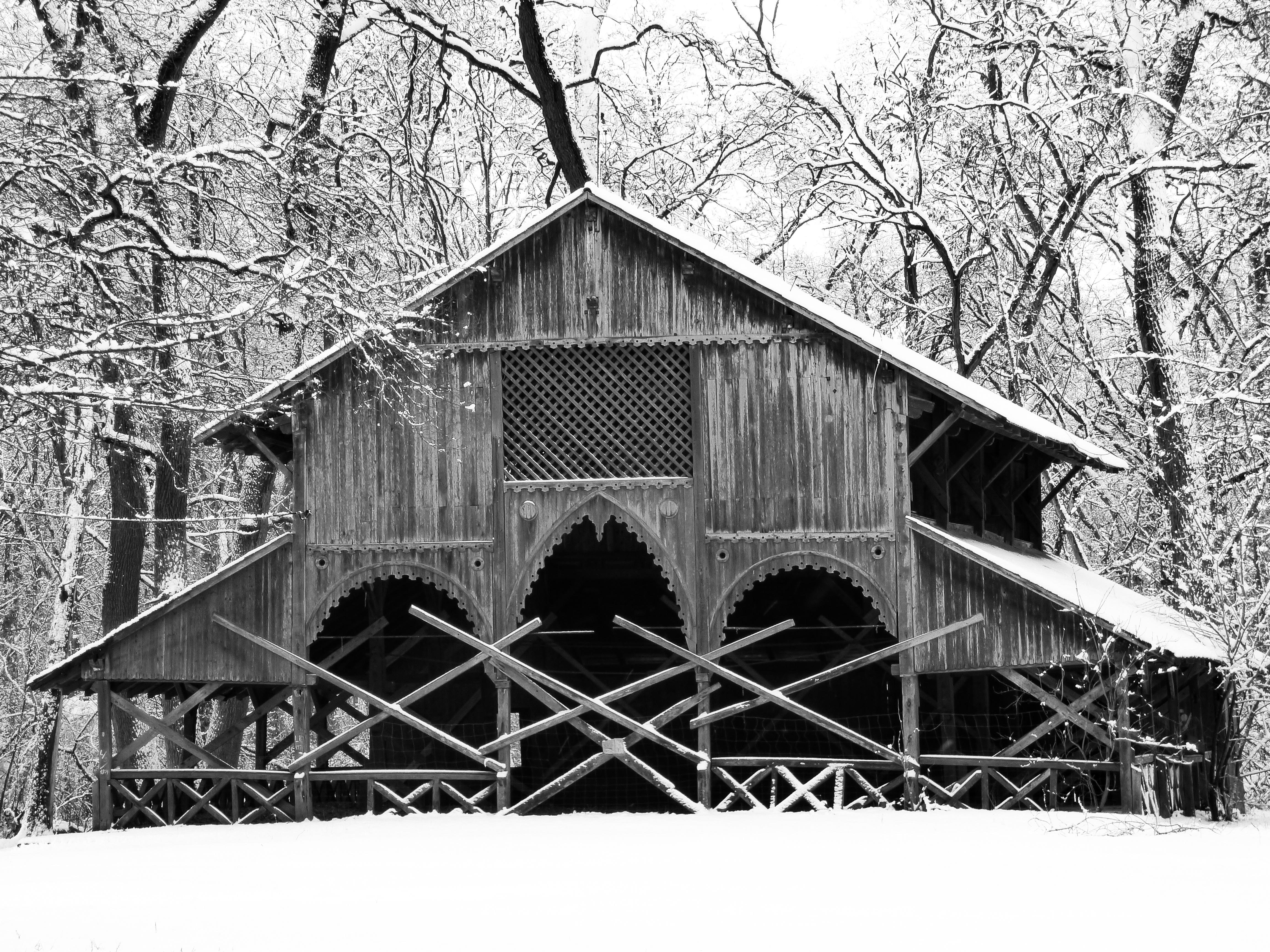 Fotos gratis : árbol, naturaleza, bosque, rama, nieve, frío, en ...