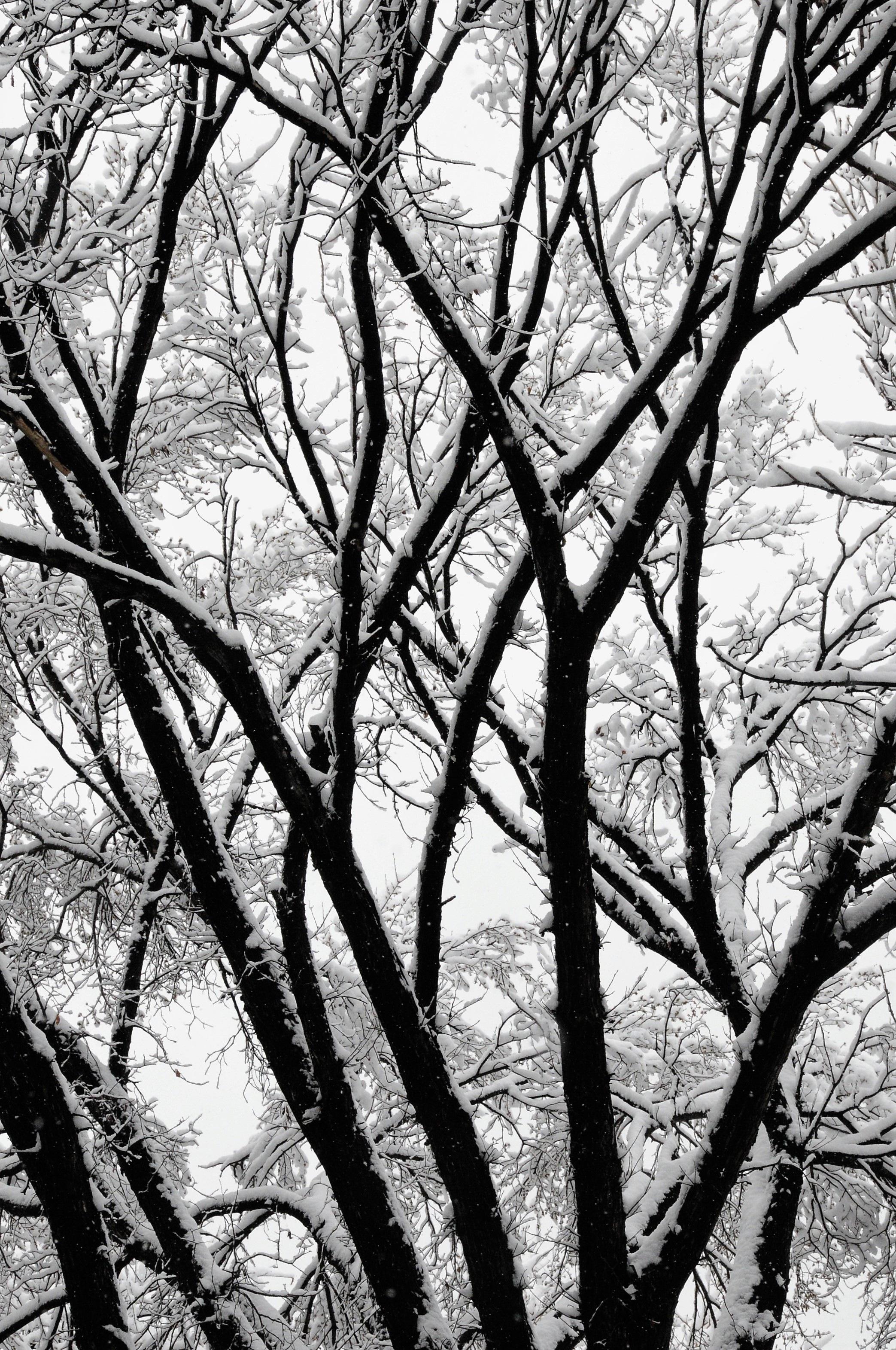 Fotos gratis rbol naturaleza bosque rama nieve en for Arboles en invierno
