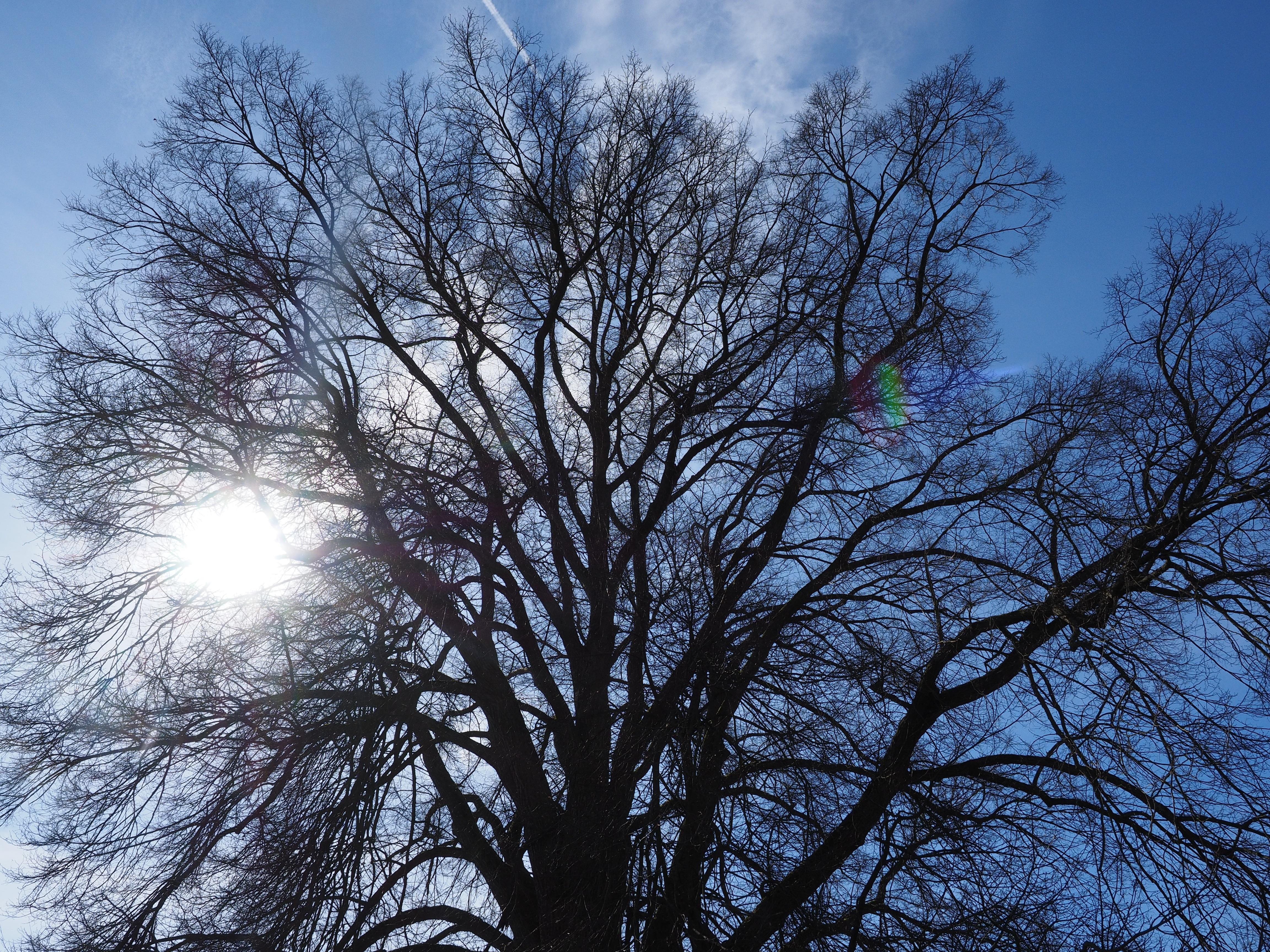 Fotos gratis rbol naturaleza bosque rama nieve for Arboles en invierno