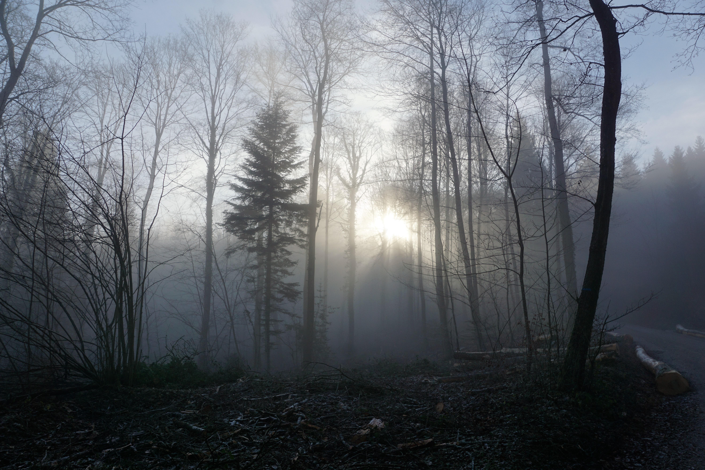 сорок картинка мистическое утро успенскому