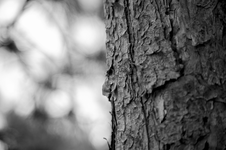 Banco de imagens : natureza, floresta, ramo, inverno, Preto e branco,  plantar, luz solar, folha, tronco, memória, Trevas, monocromático, estação,  fechar-se, casca de árvore, era, Madeira morta, Madeira árvore, Fotografia  monocromática, Memórias