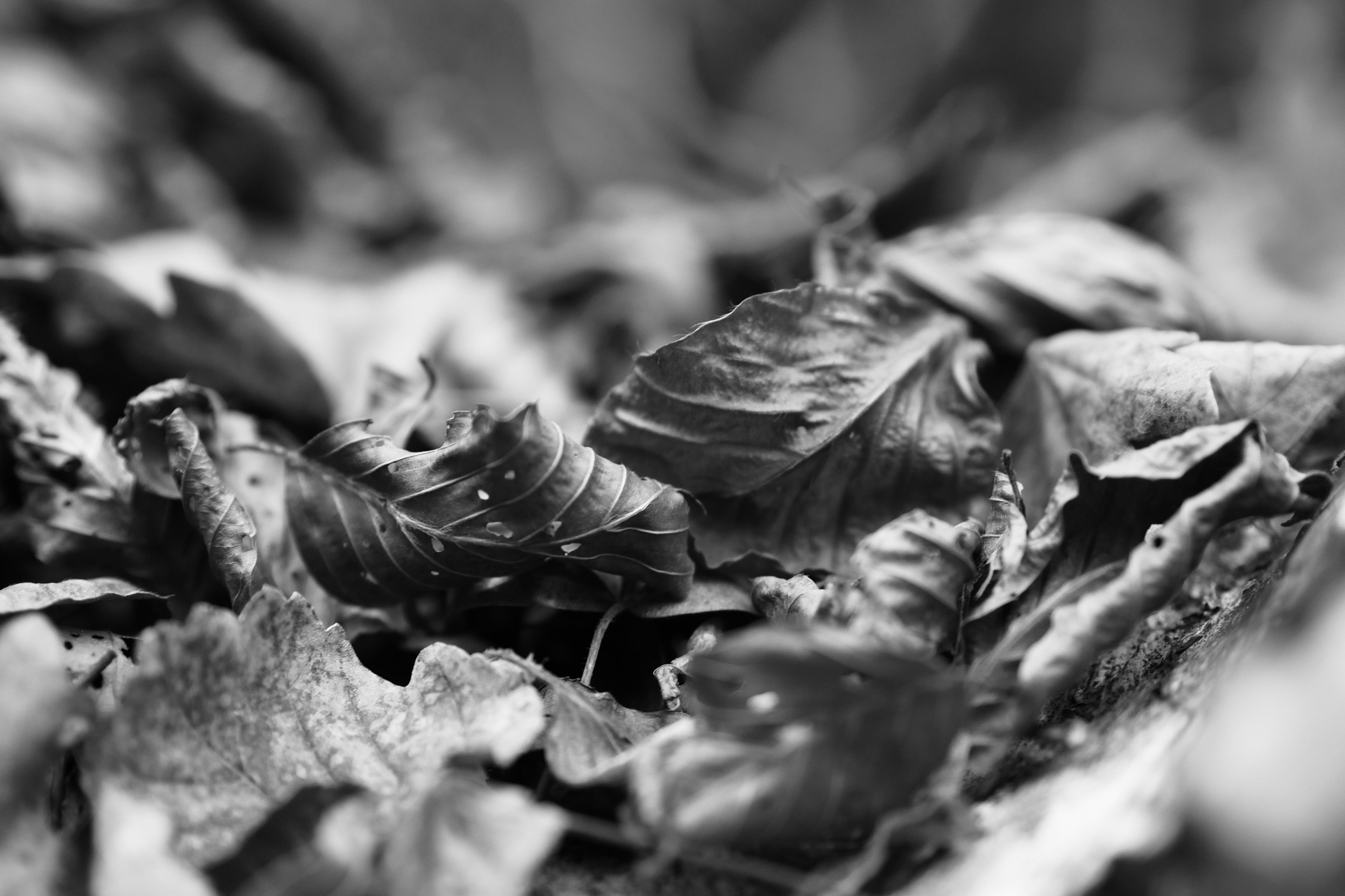 черные листья картинки многих подтёки