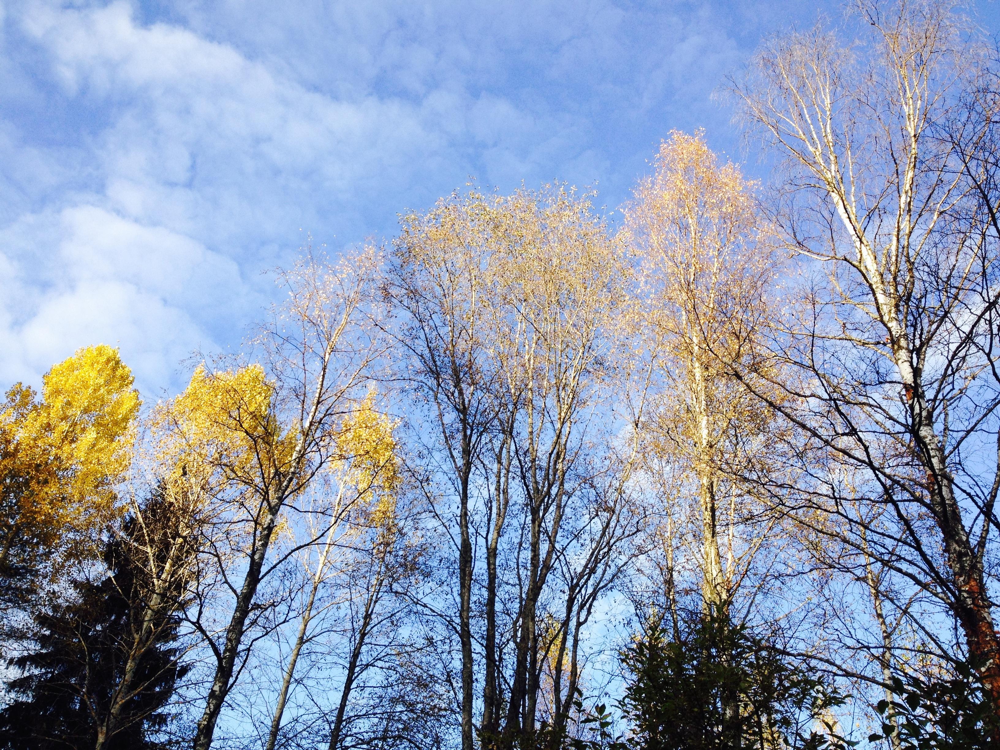 foto de Images Gratuites : arbre, la nature, forêt, branche, hiver, nuage ...