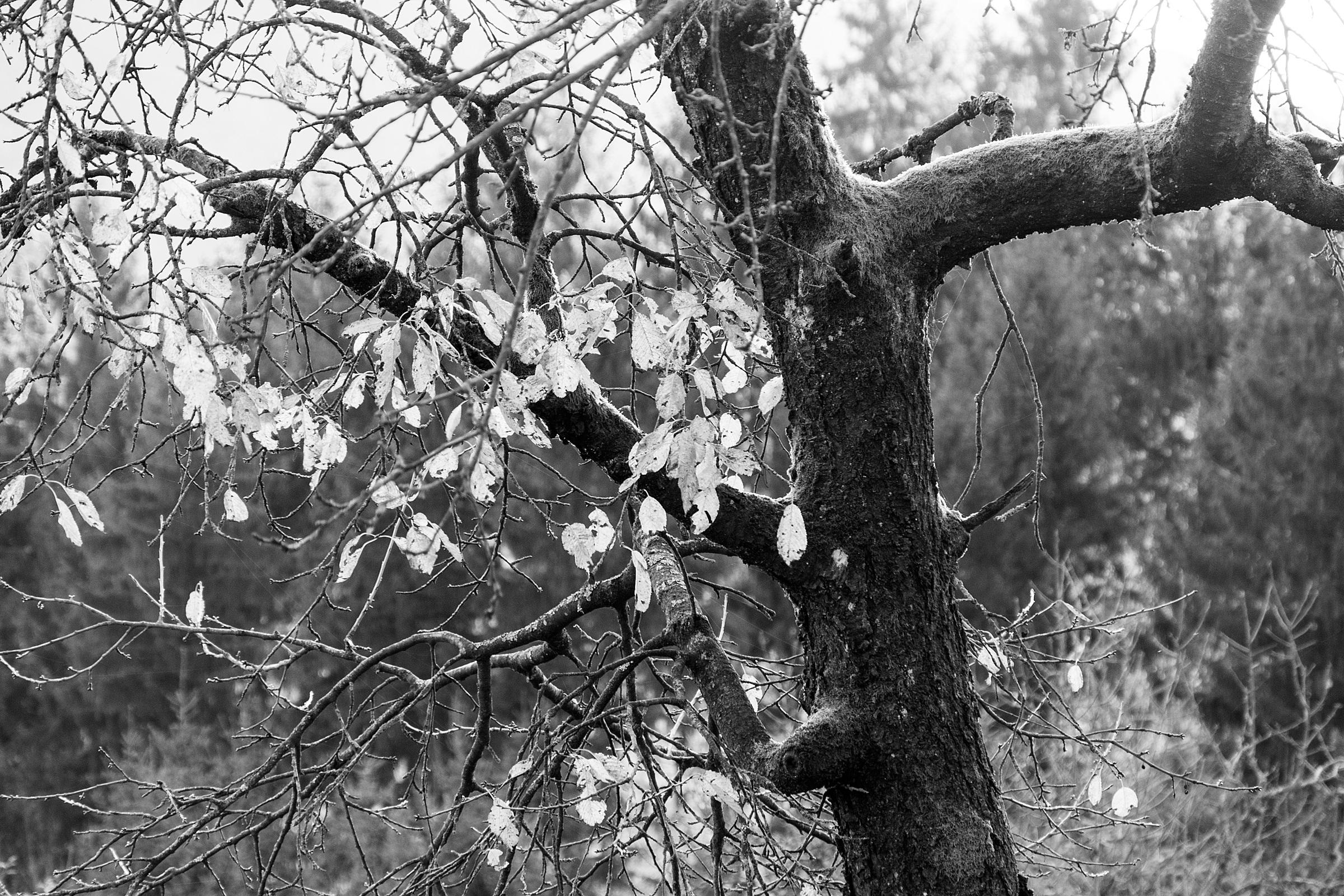 Fotos gratis : árbol, naturaleza, bosque, rama, invierno, ligero, en ...