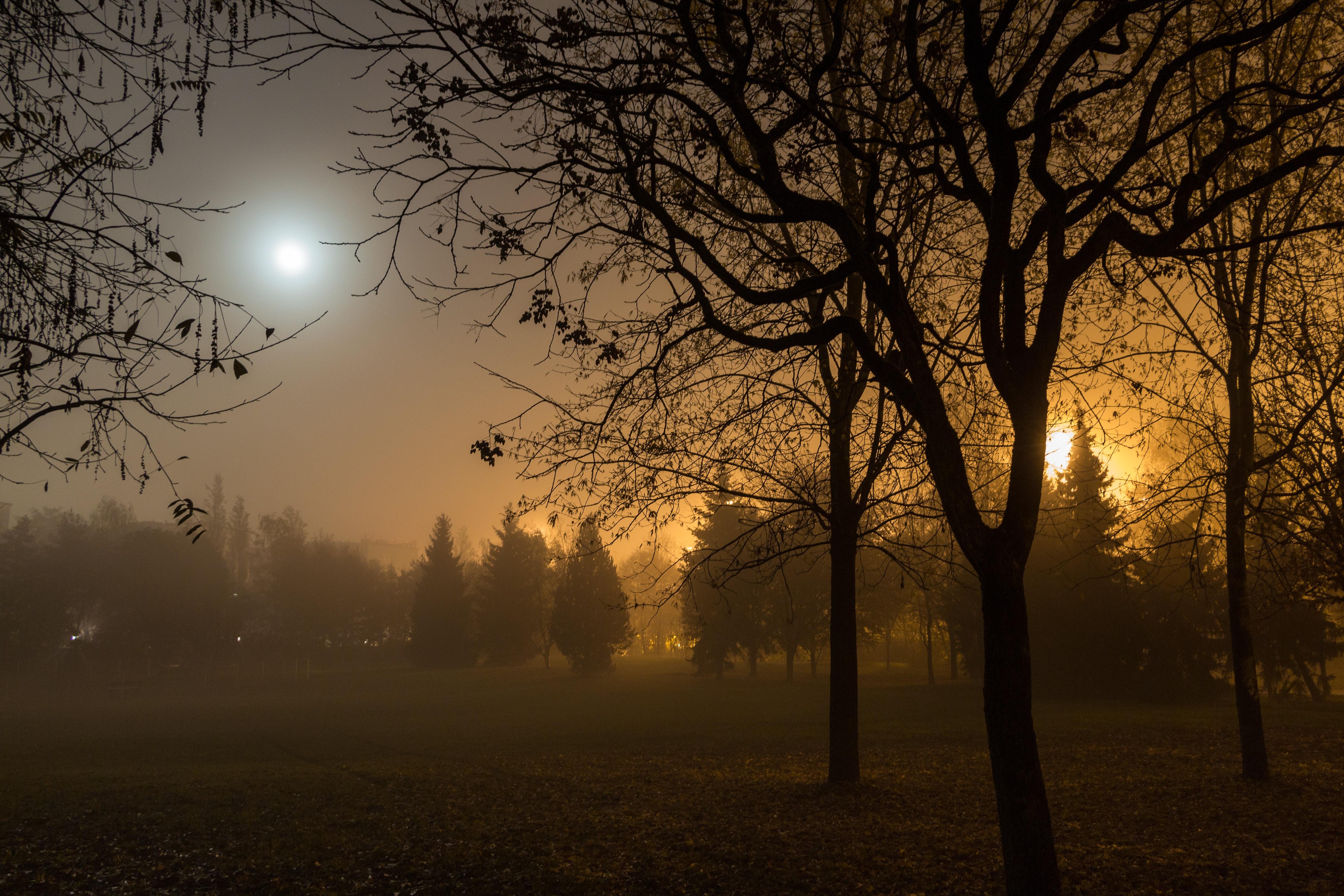 sun fog sunrise trees - photo #19