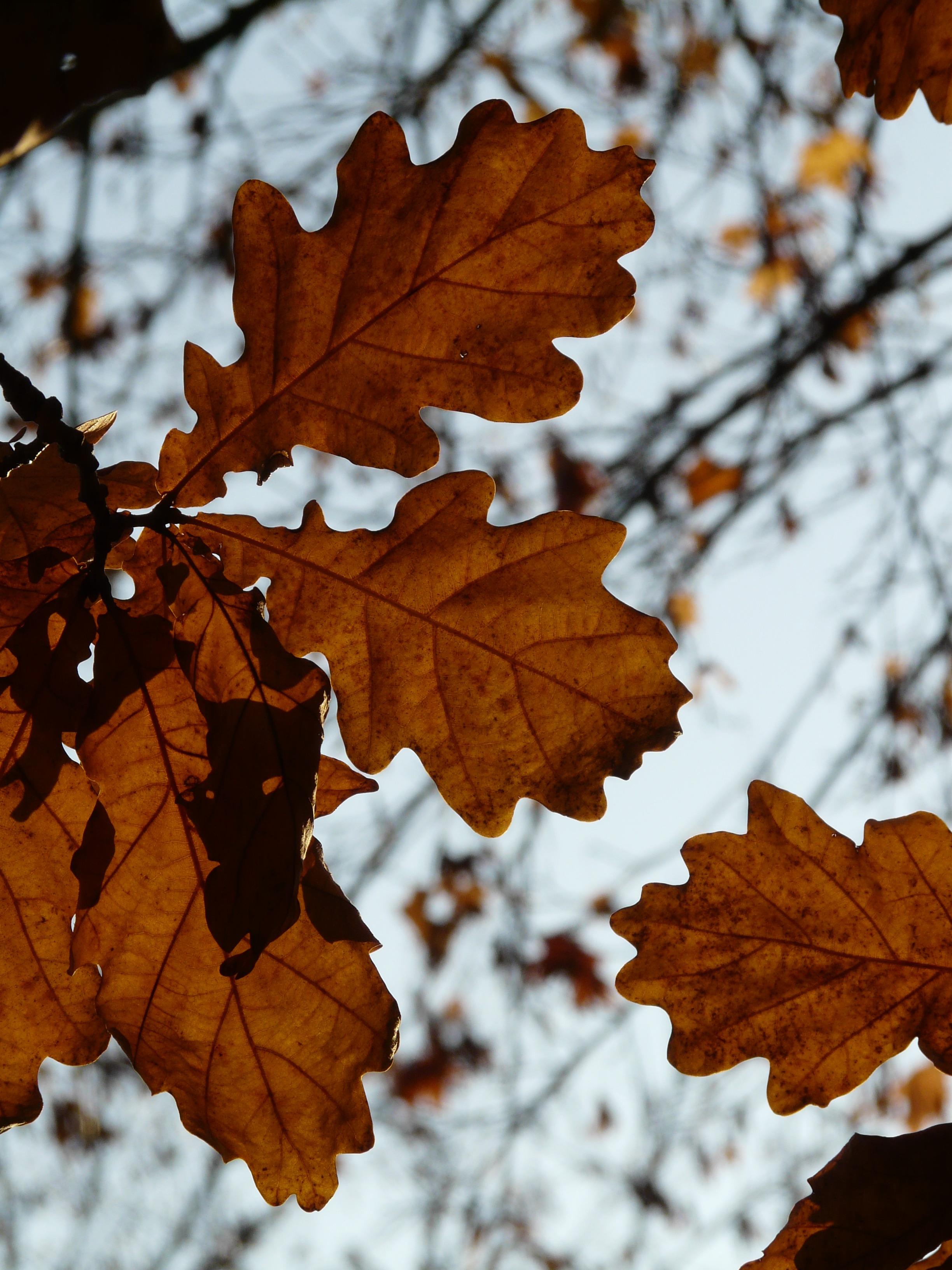 уважаем личное какого цвета листья дуба летом фото все парни любят
