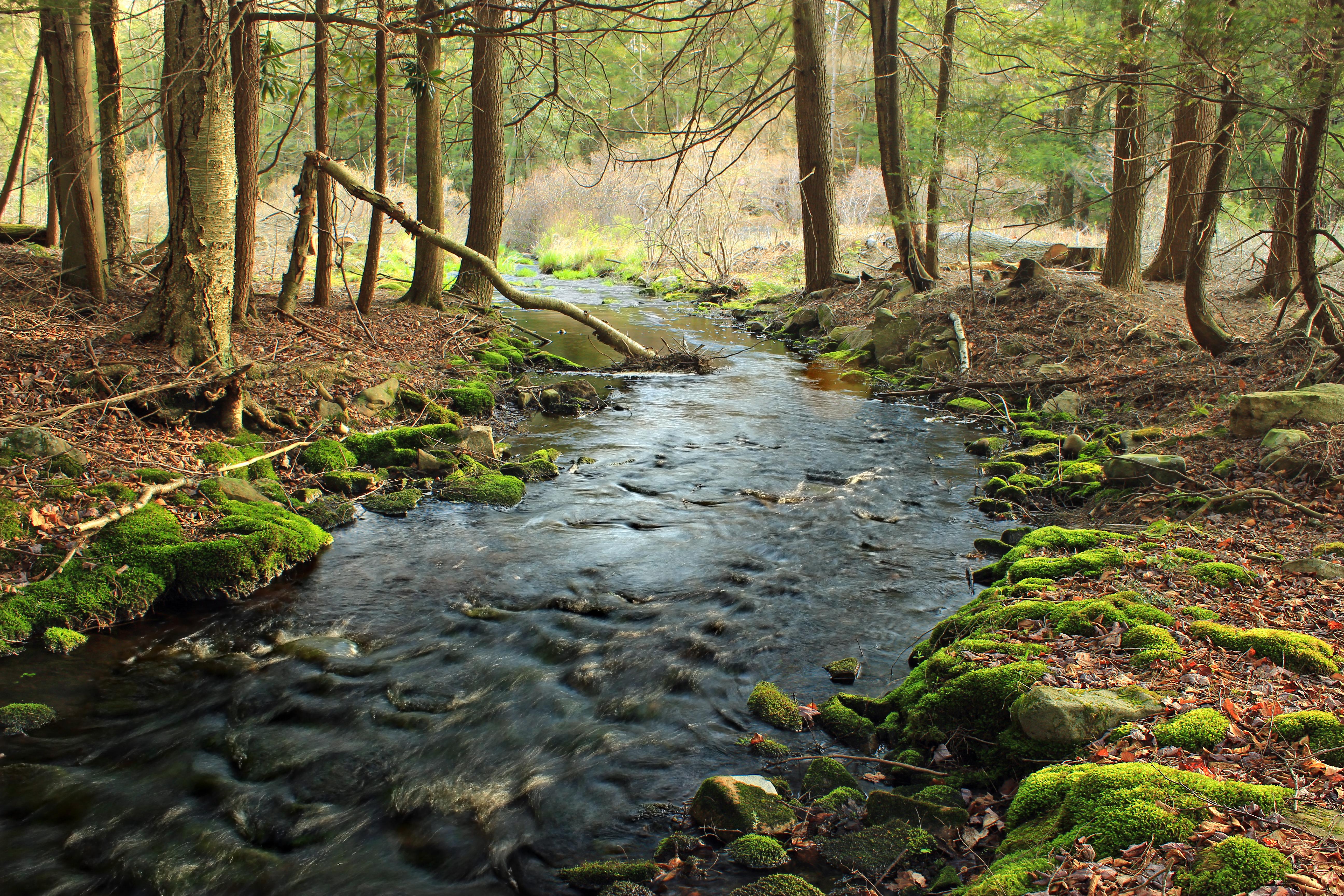 коже фото ручей в лесу поспешили поздравить