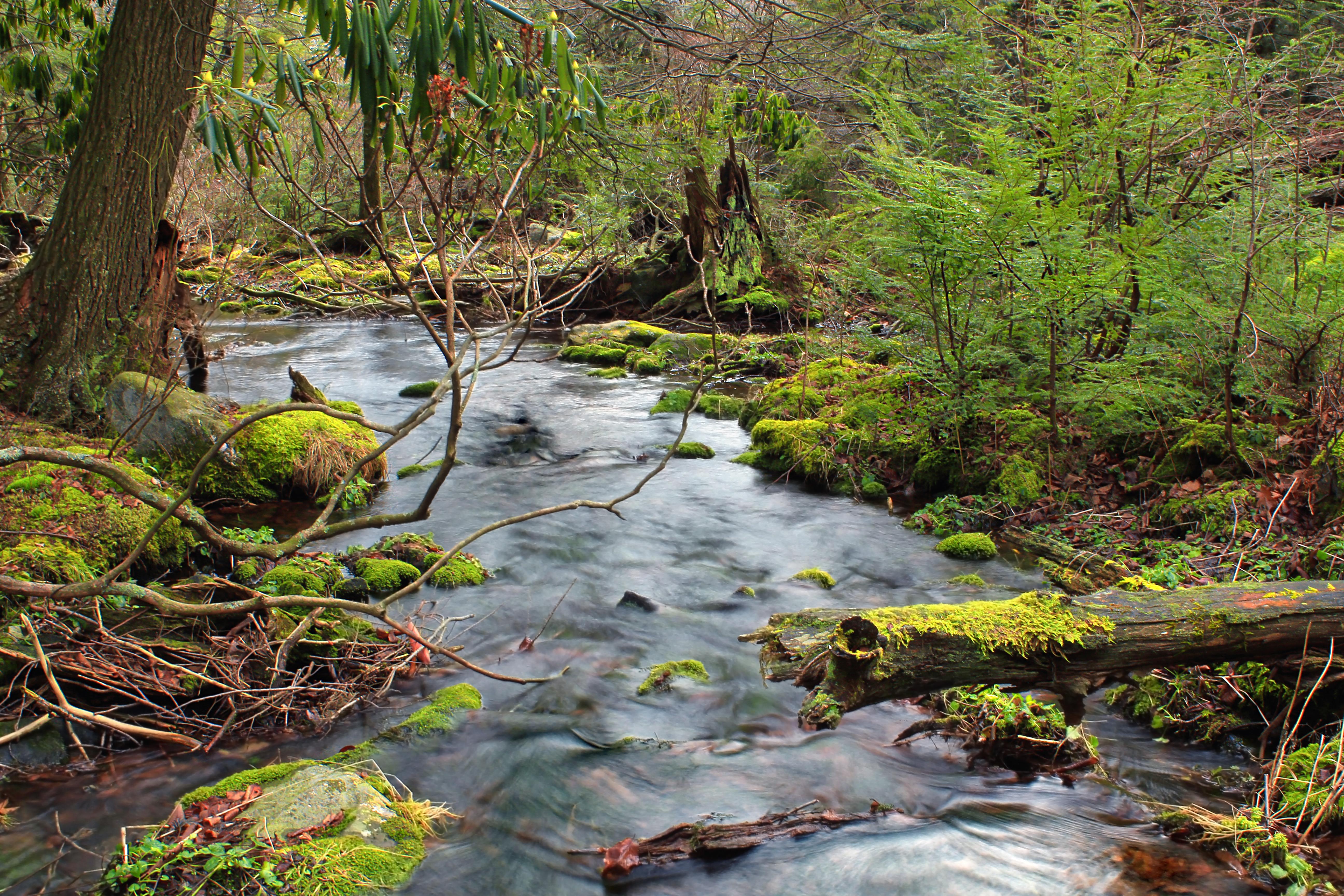 Картинка лесного ручья