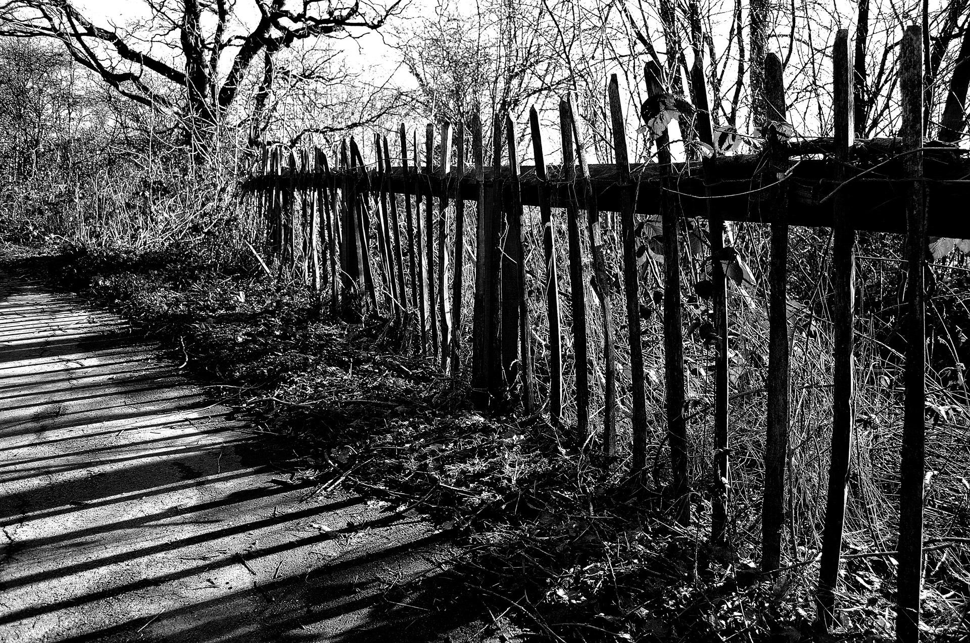 Kostenlose foto Baum Natur Wald Zaun Schwarz und weiß Holz