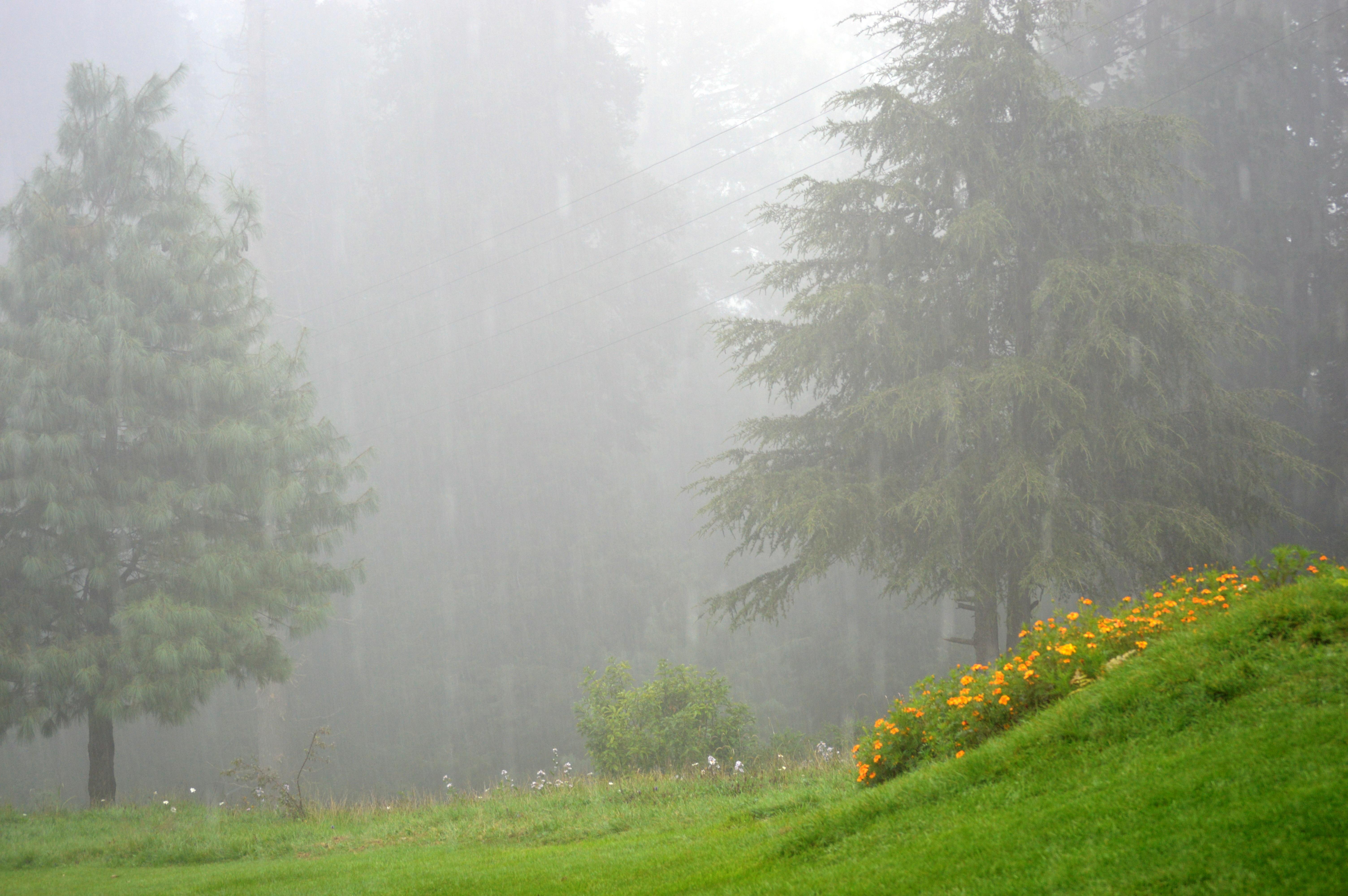 Картинки дождя и тумана