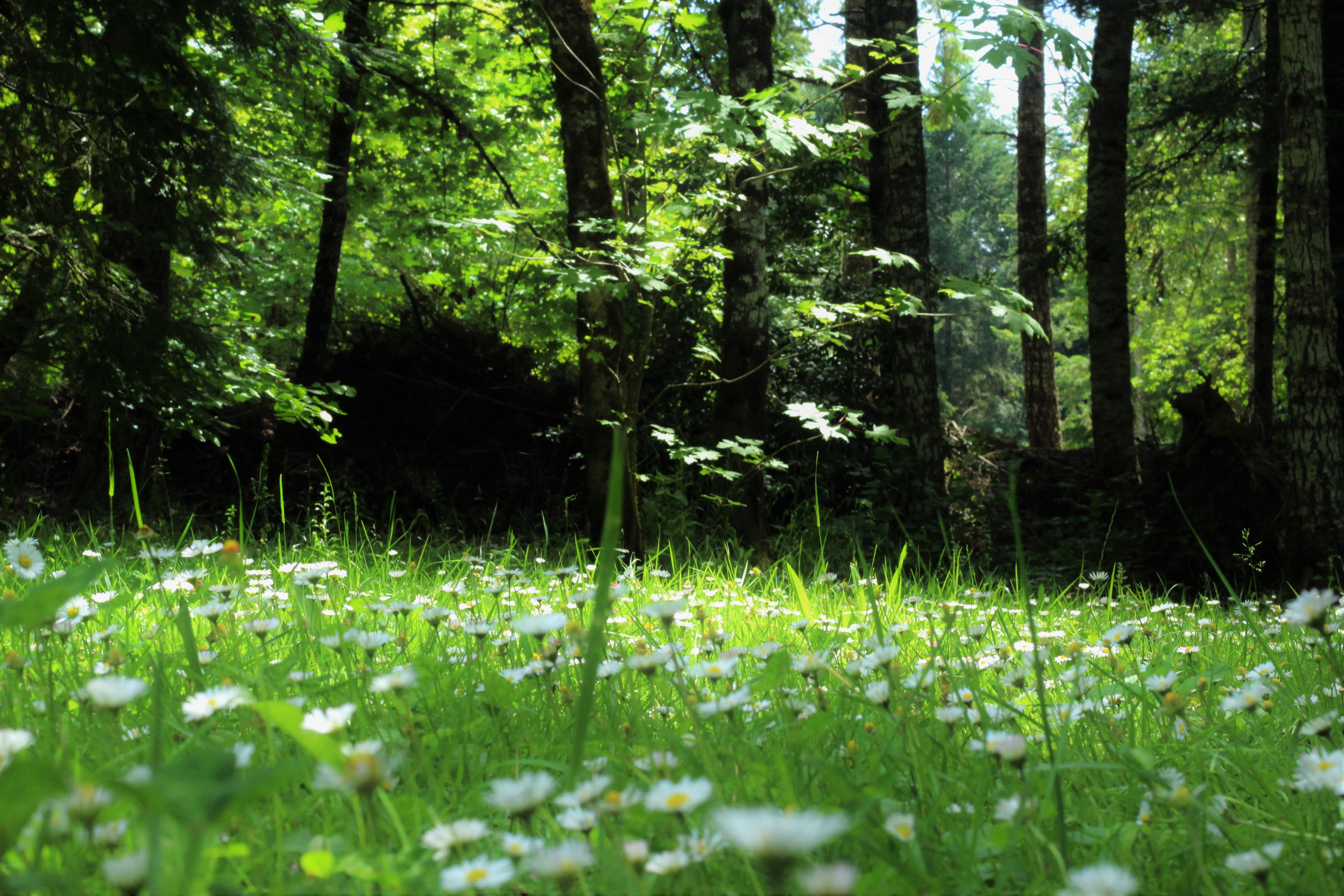 Картинки природа лесная полянка трава цветы красивые