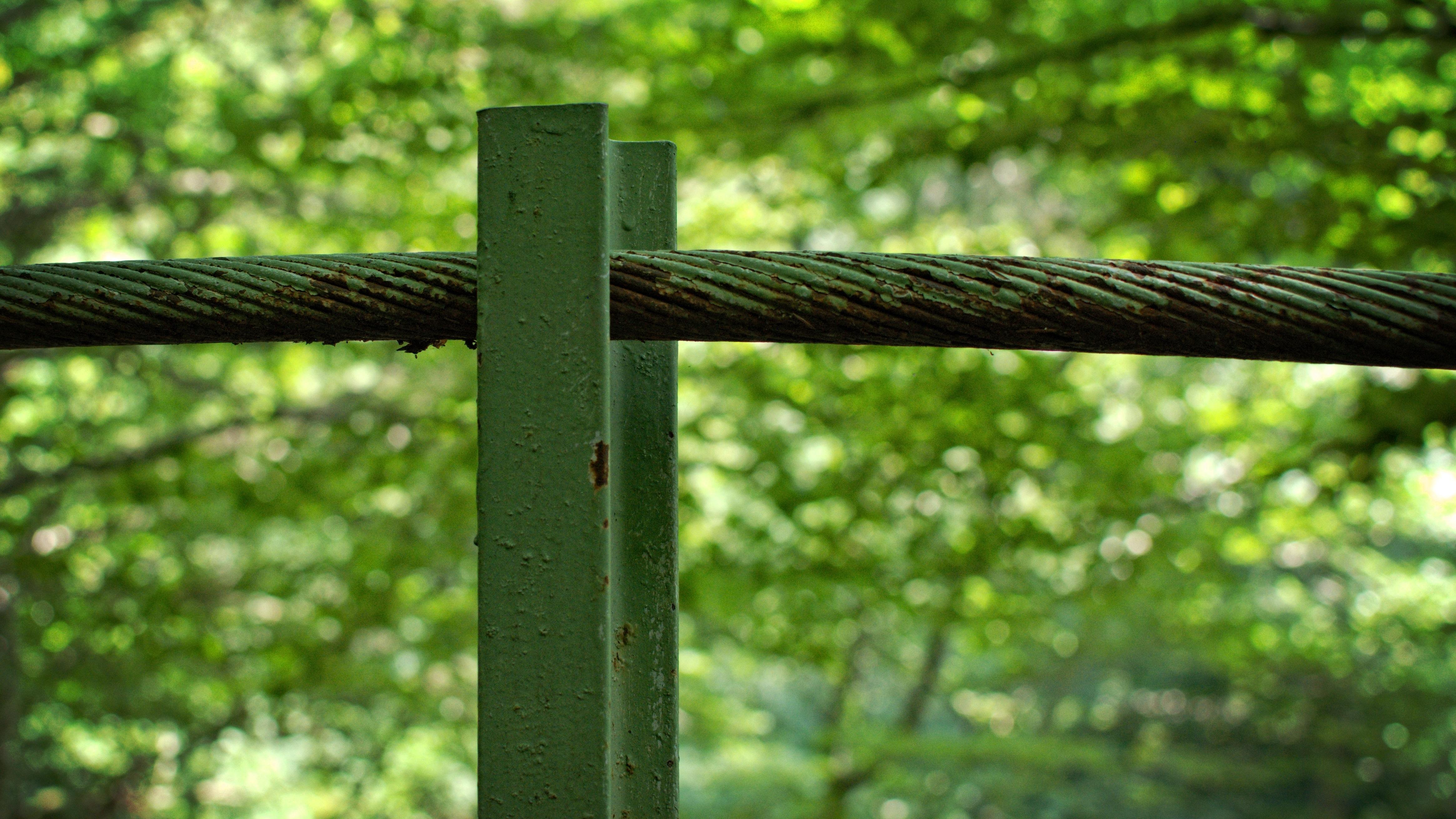 Kostenlose foto : Baum, Natur, Wald, Gras, Ast, Tau, Zaun, Post ...