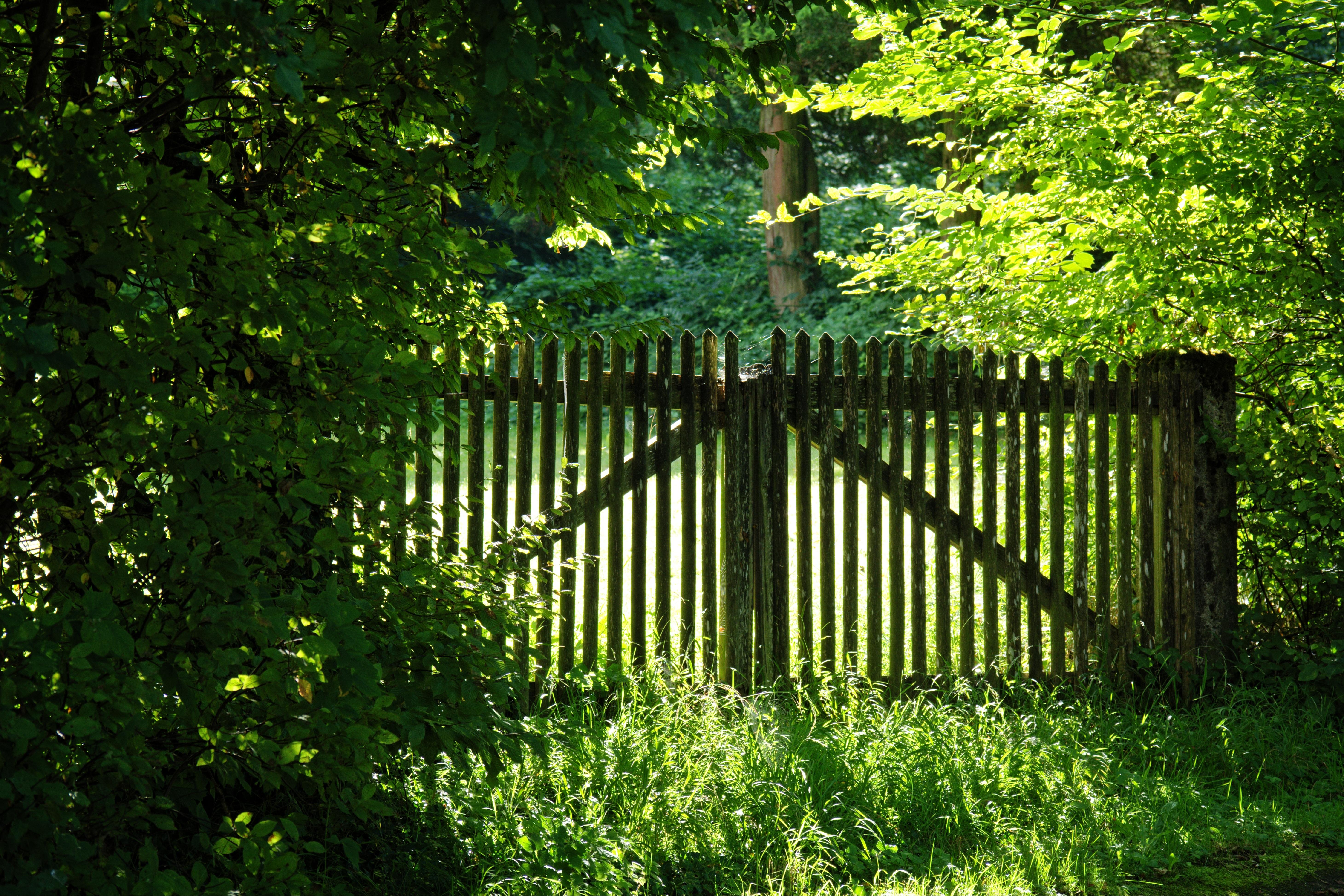 картинки лес и забор короткие шорты