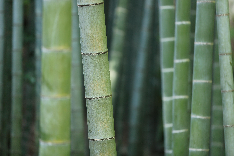Kostenlose Foto Baum Natur Wald Gras Ast Wachstum Pflanze