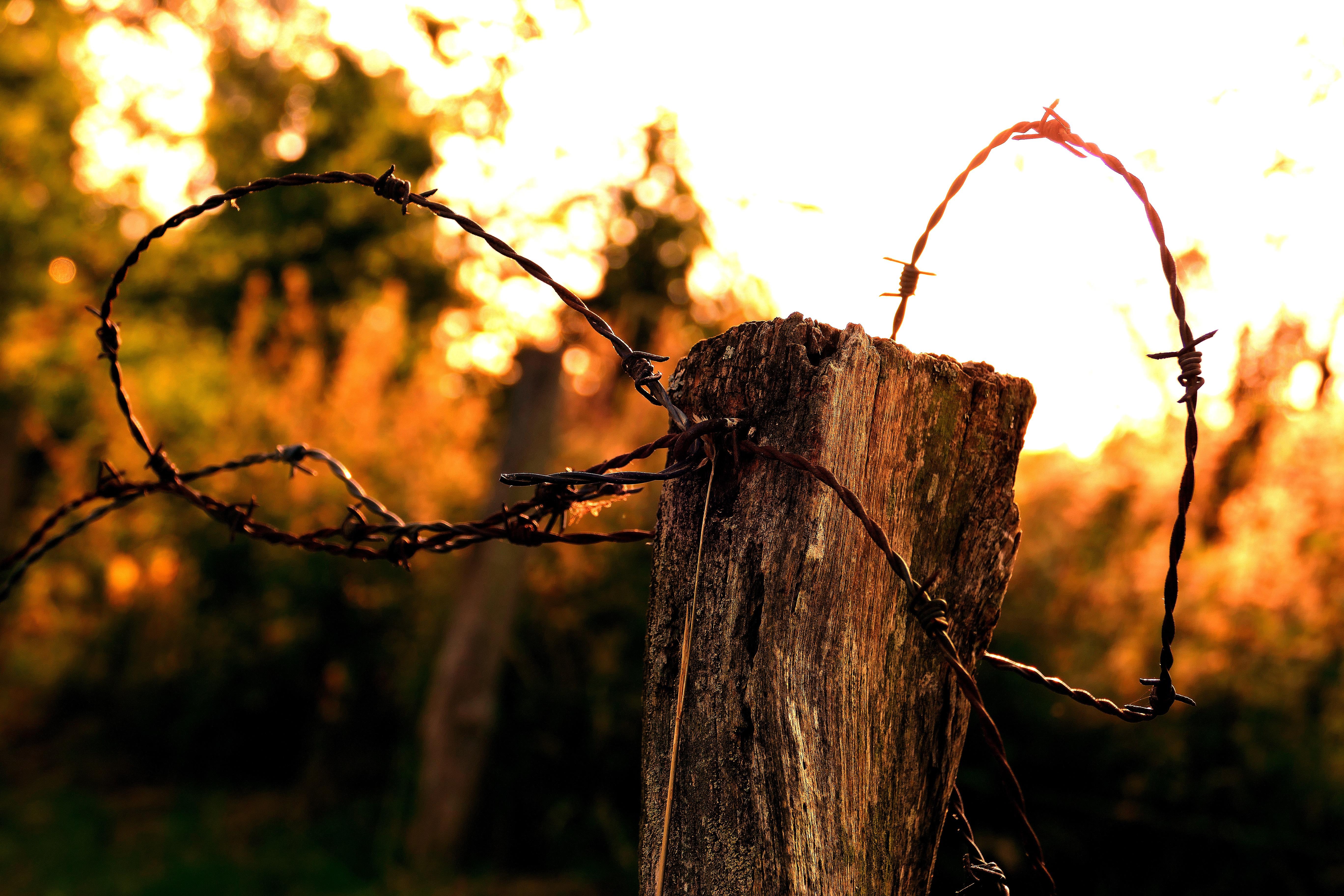 Kostenlose foto : Baum, Natur, Wald, Gras, Ast, Licht, Stacheldraht ...