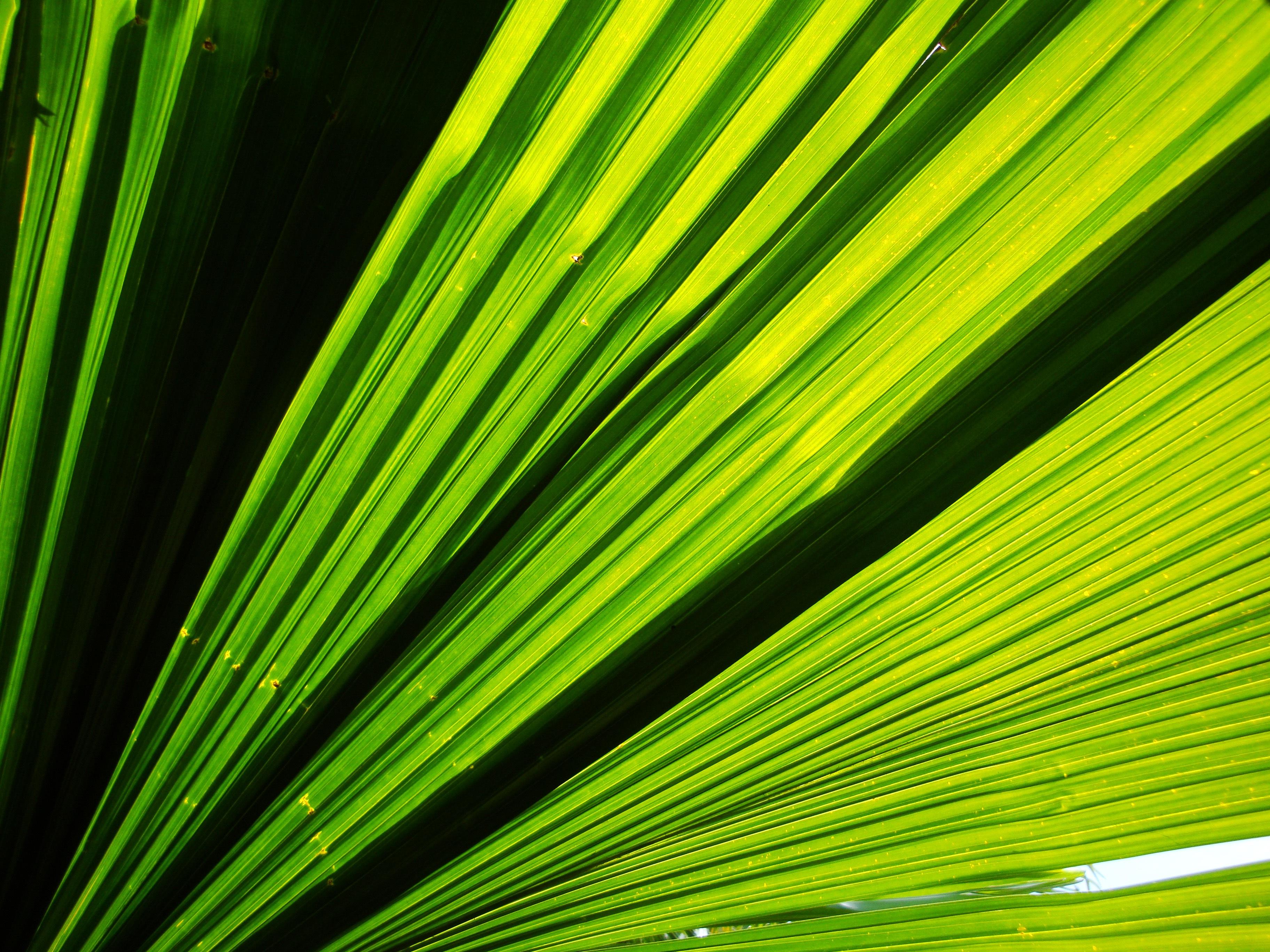 Wellness bilder grün  Kostenlose foto : Baum, Natur, Wald, Gras, Ast, Licht, Pflanze ...