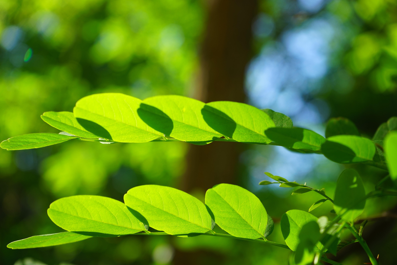 Fotos gratis rbol naturaleza bosque c sped rama for Arboles para plantar en verano