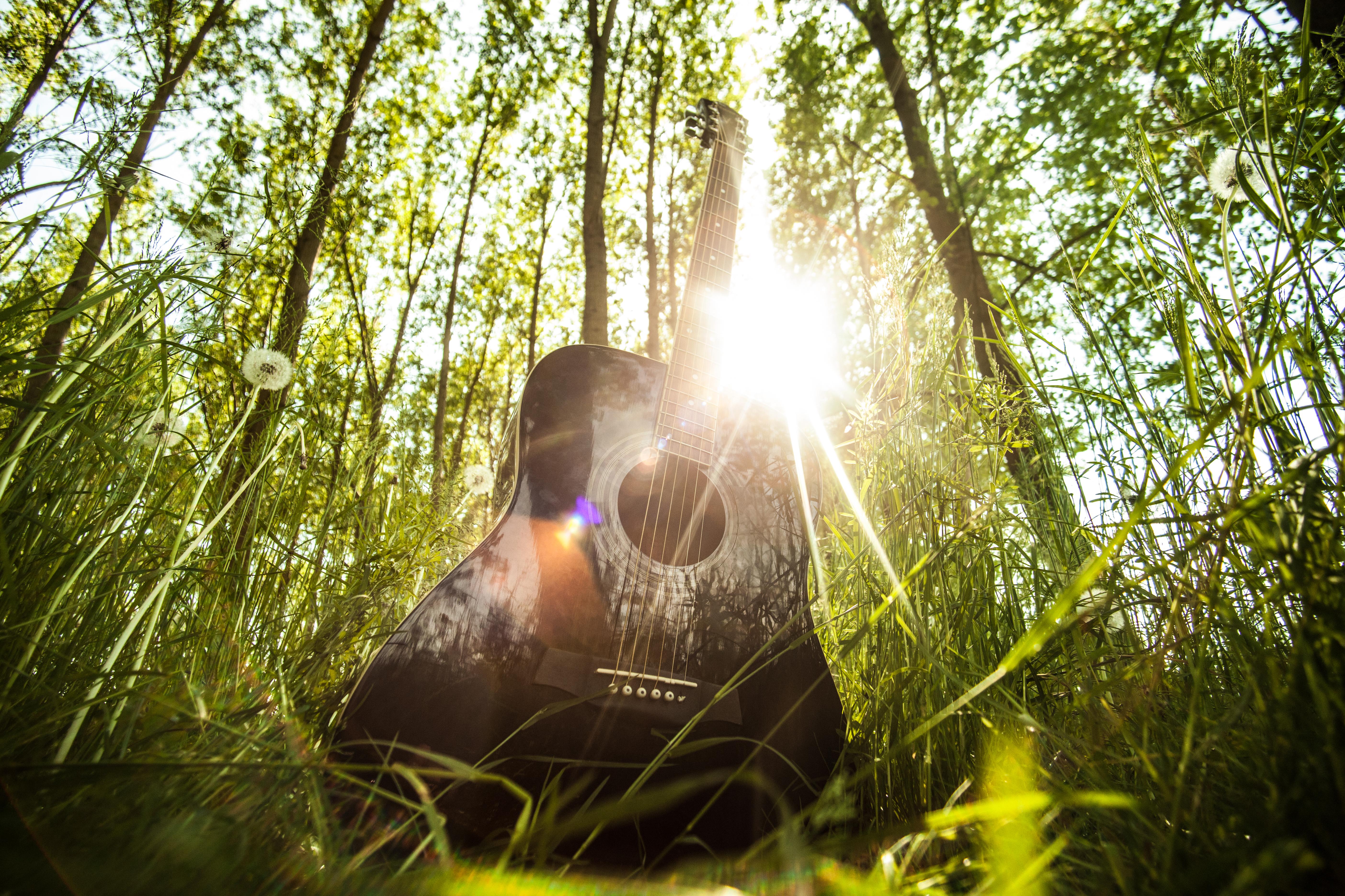 Мелодия природы фото