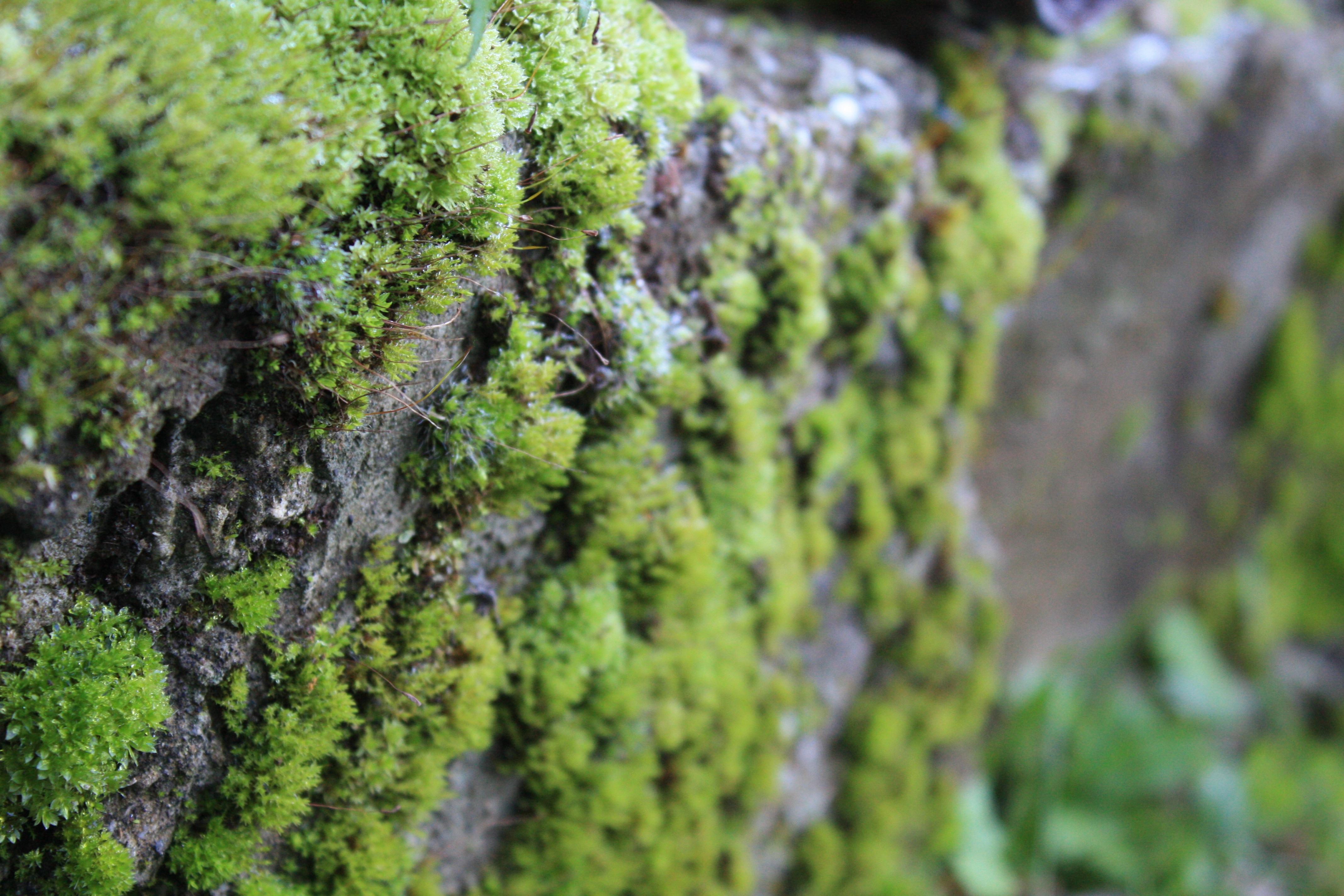 Картинки лишайника растения