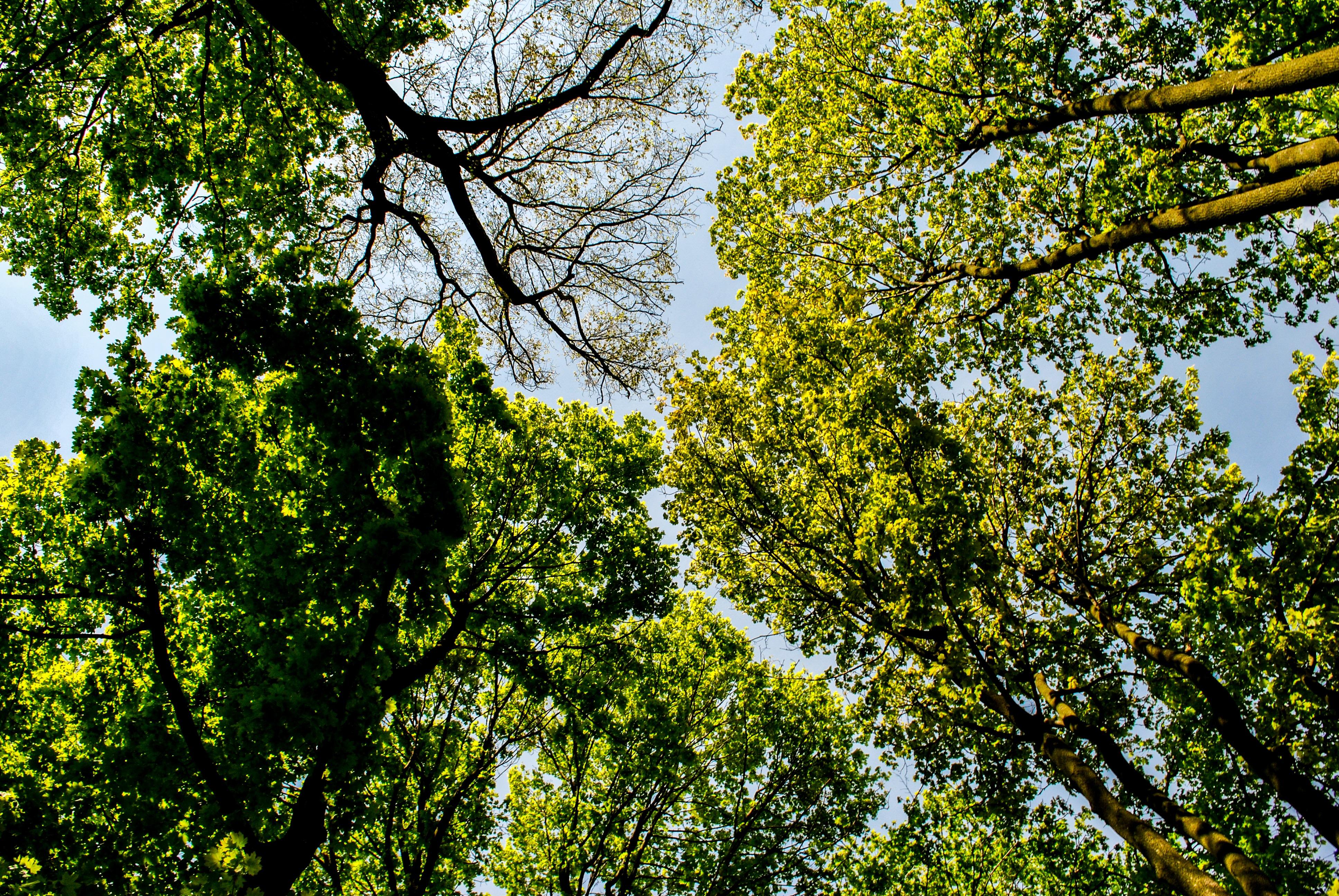 foto de Images Gratuites : arbre, la nature, herbe, branche, plante, ciel ...