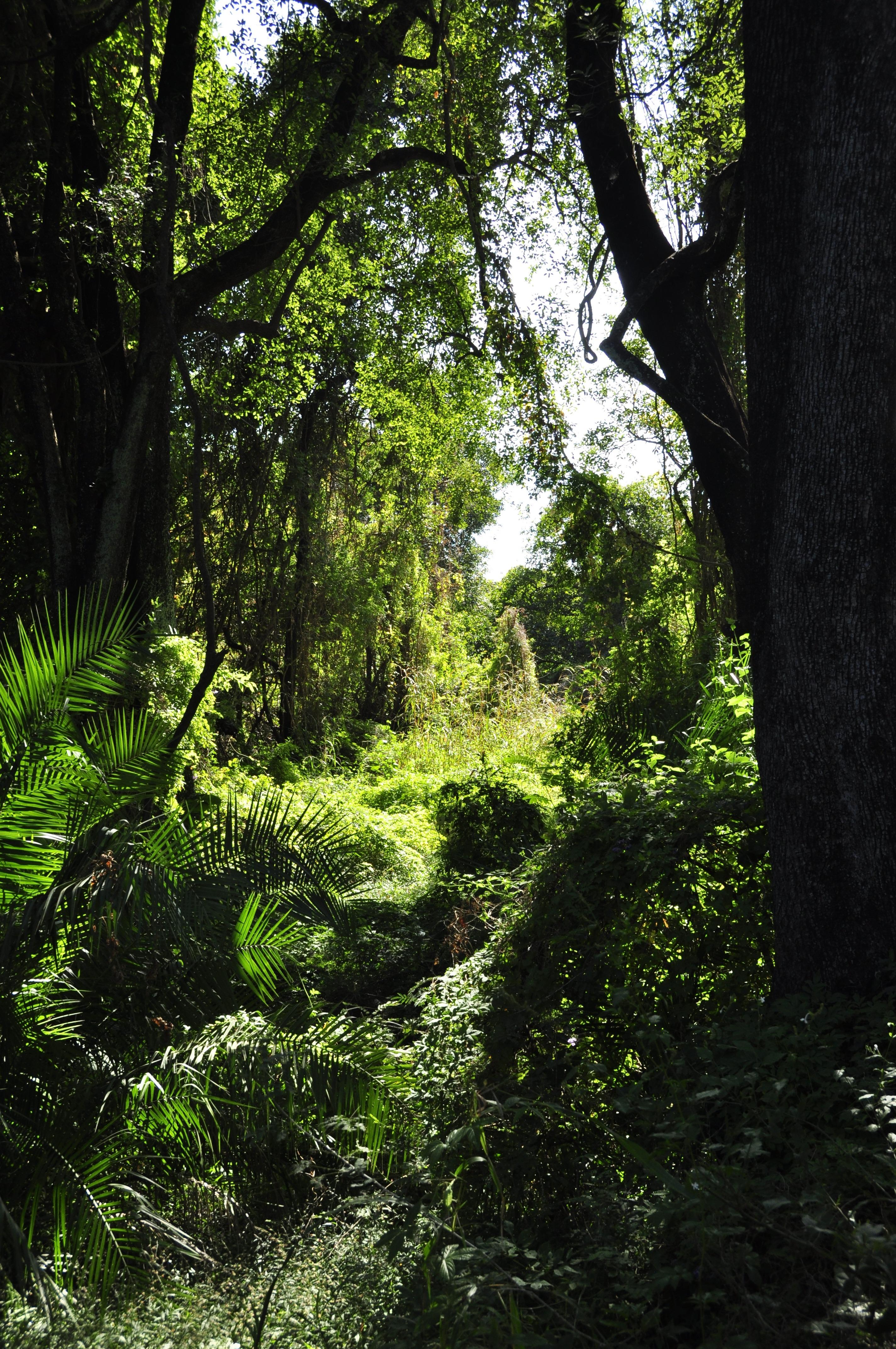 Baum Natur Wald Gras Ast Pflanze Sonnenlicht Blatt Blume Strom Grün Dschungel Herbst Afrika Botanik Garten