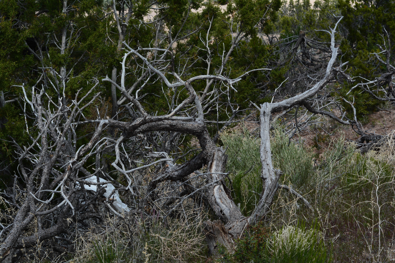 Images gratuites arbre la nature for t herbe branche for Plante ligneuse