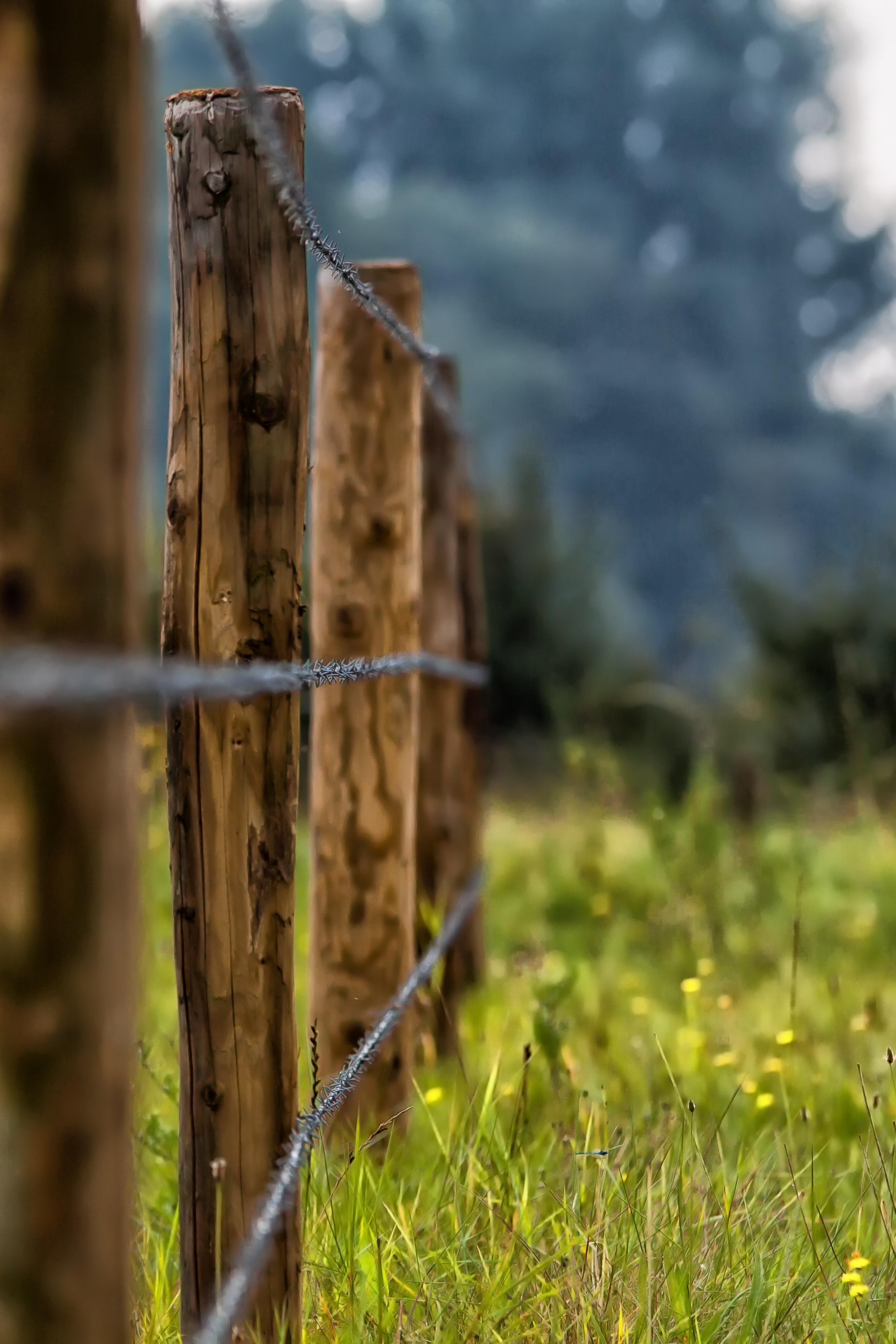 Fotos Gratis 225 Rbol Naturaleza Bosque C 233 Sped Cerca