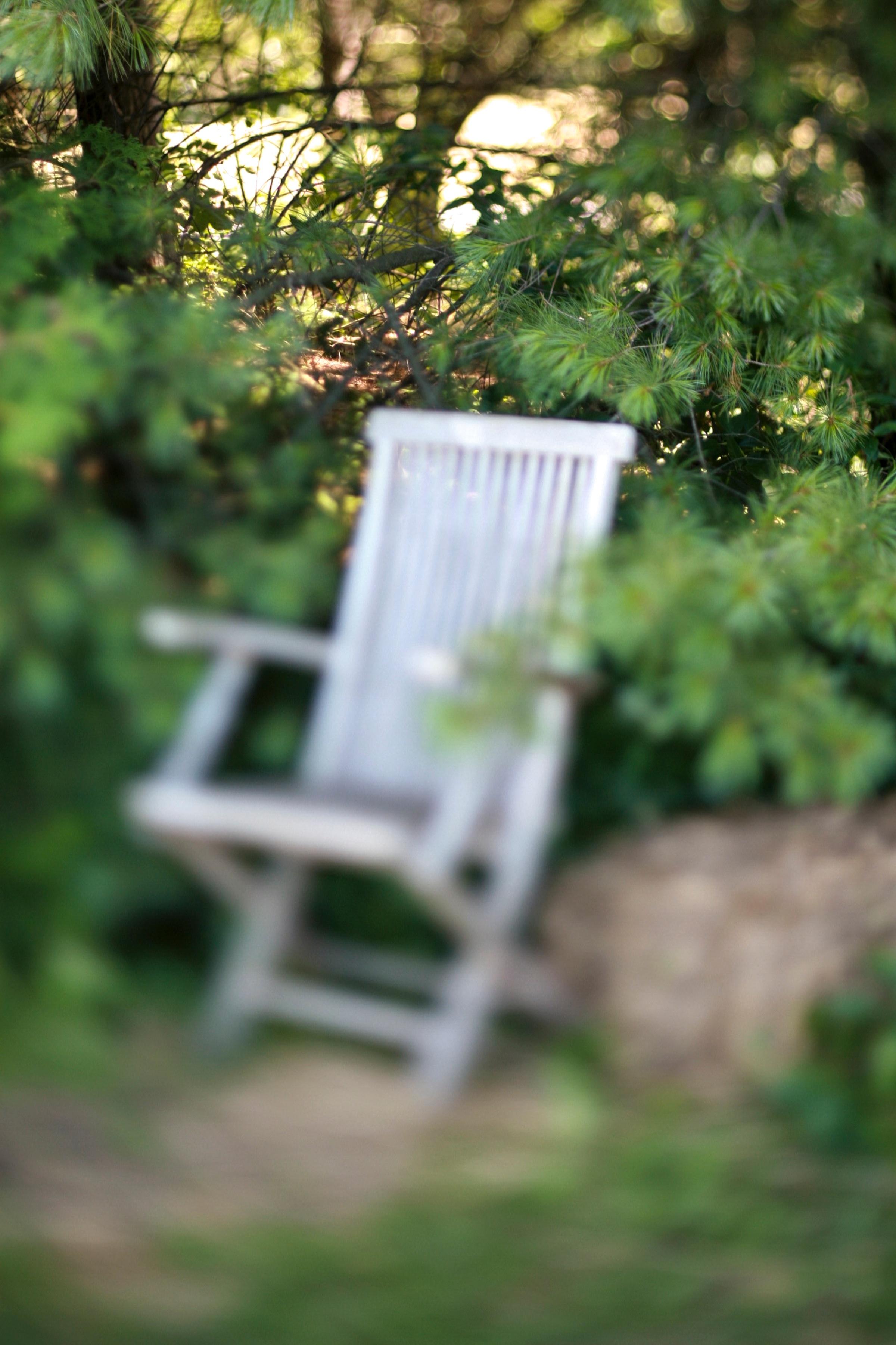 Fotos gratis : árbol, naturaleza, bosque, césped, prado, luz de sol ...