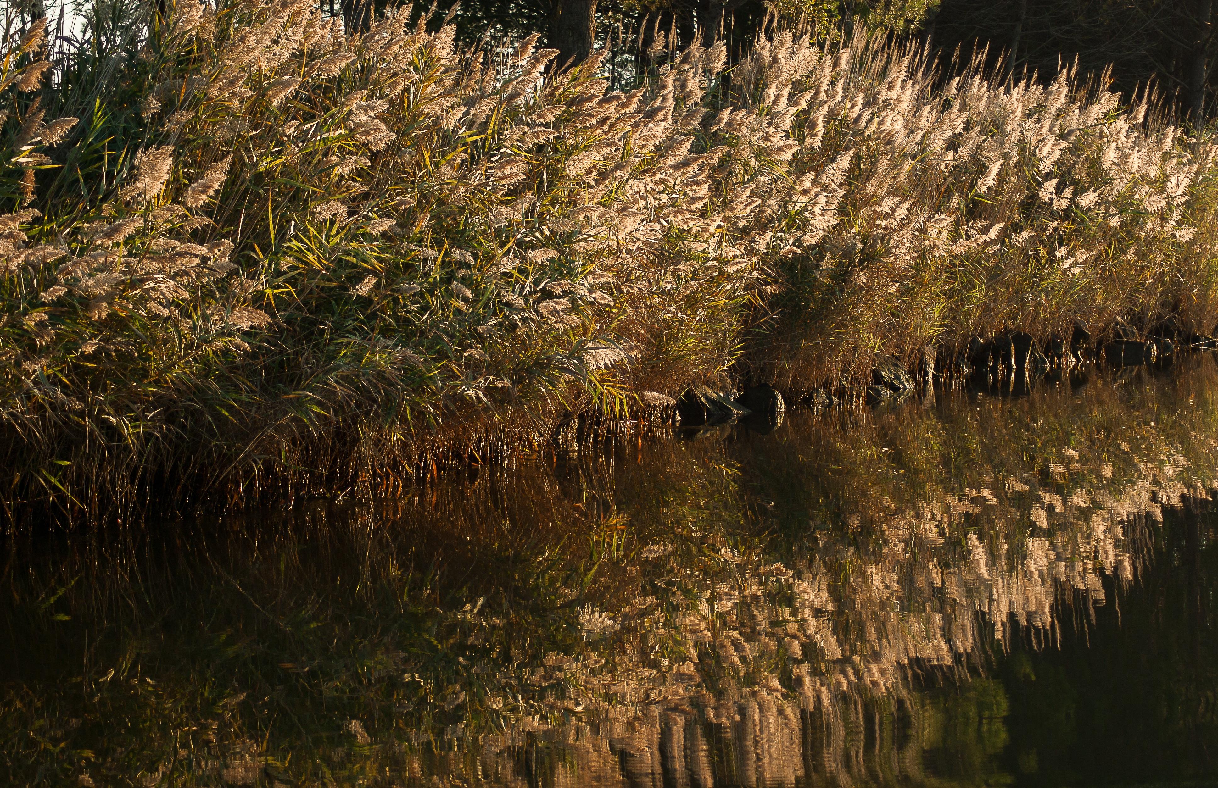 Gratis afbeeldingen : boom natuur bos moeras wildernis fabriek