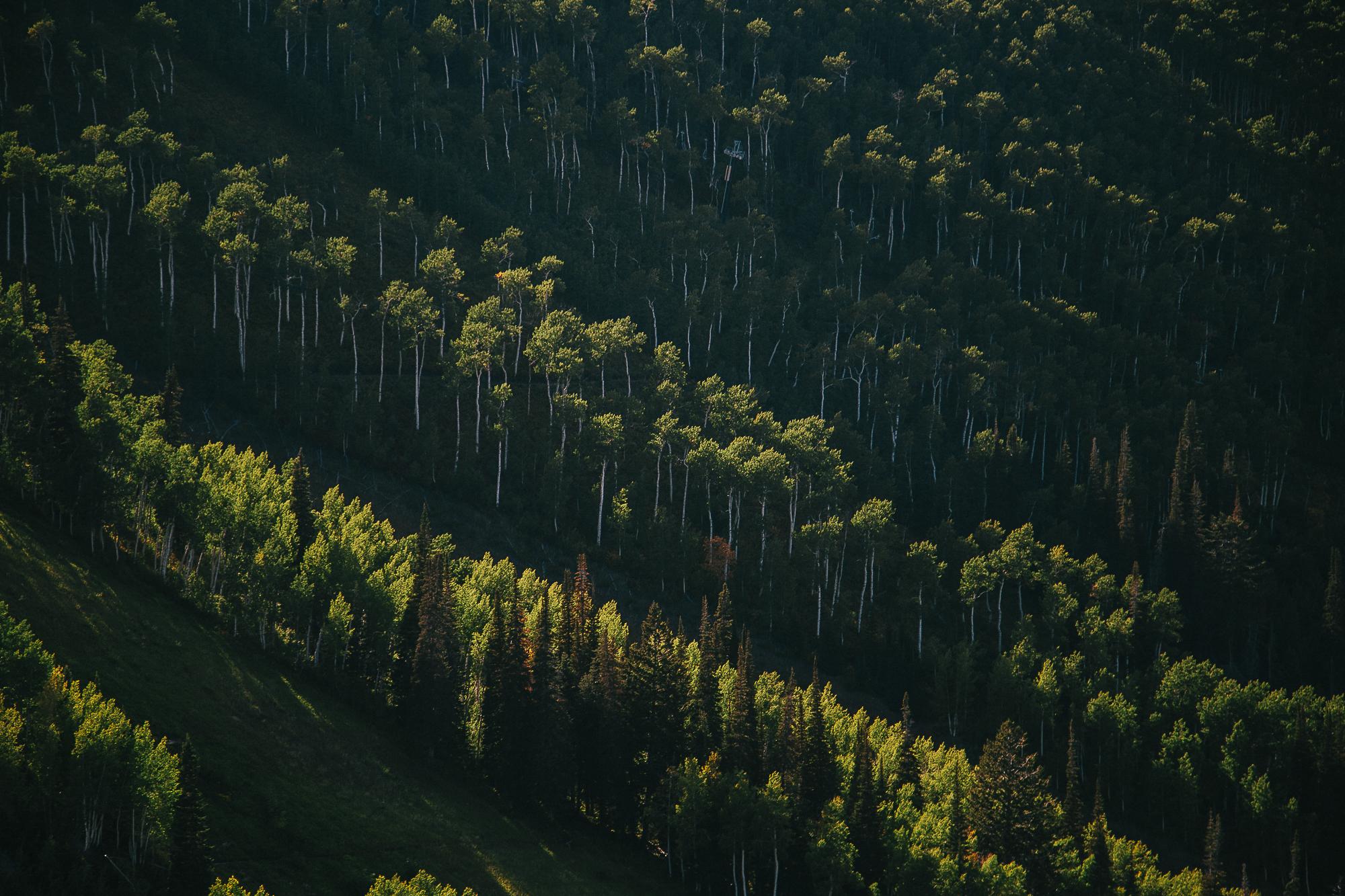 Экология леса фото