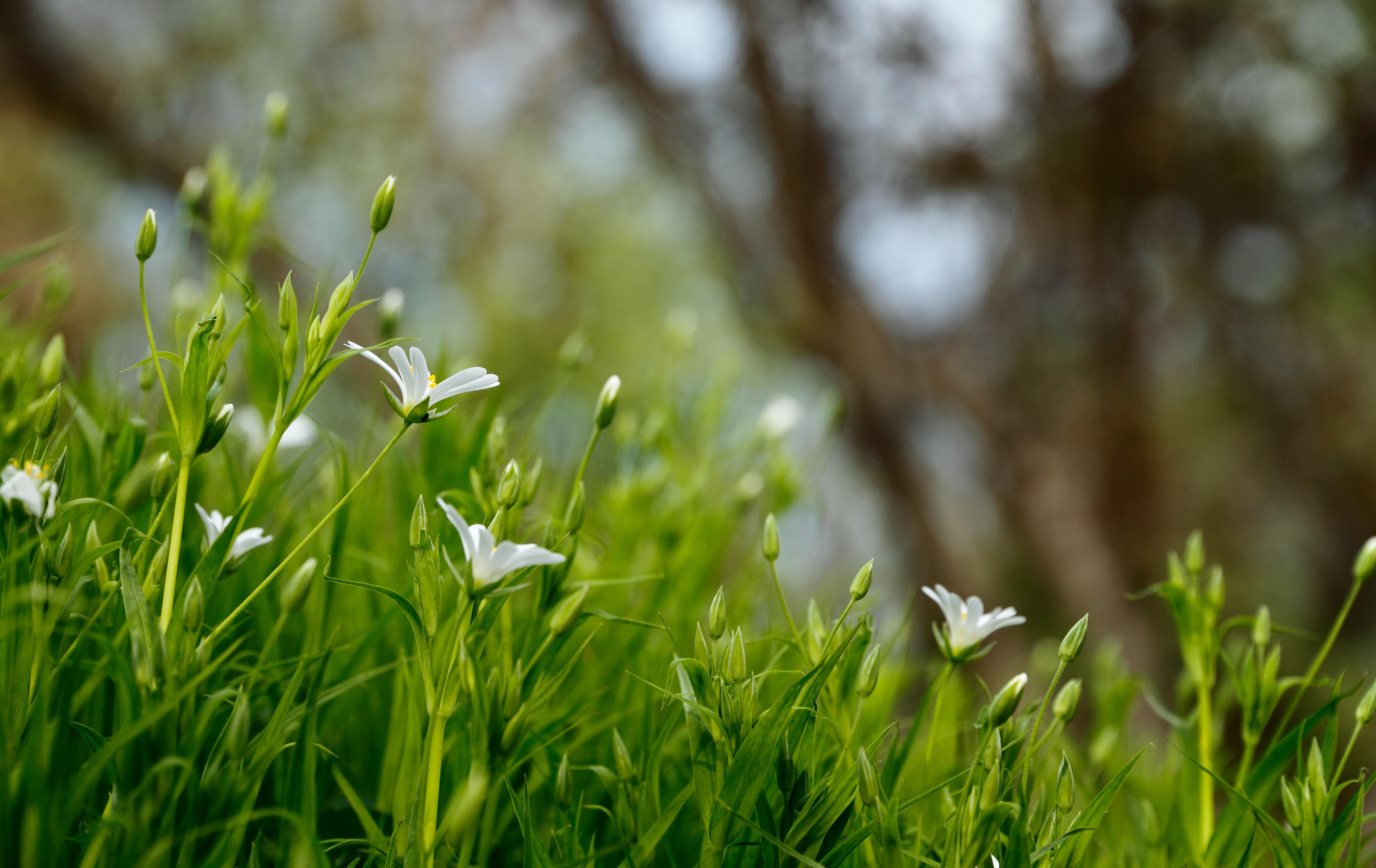 Картинка весна зелень