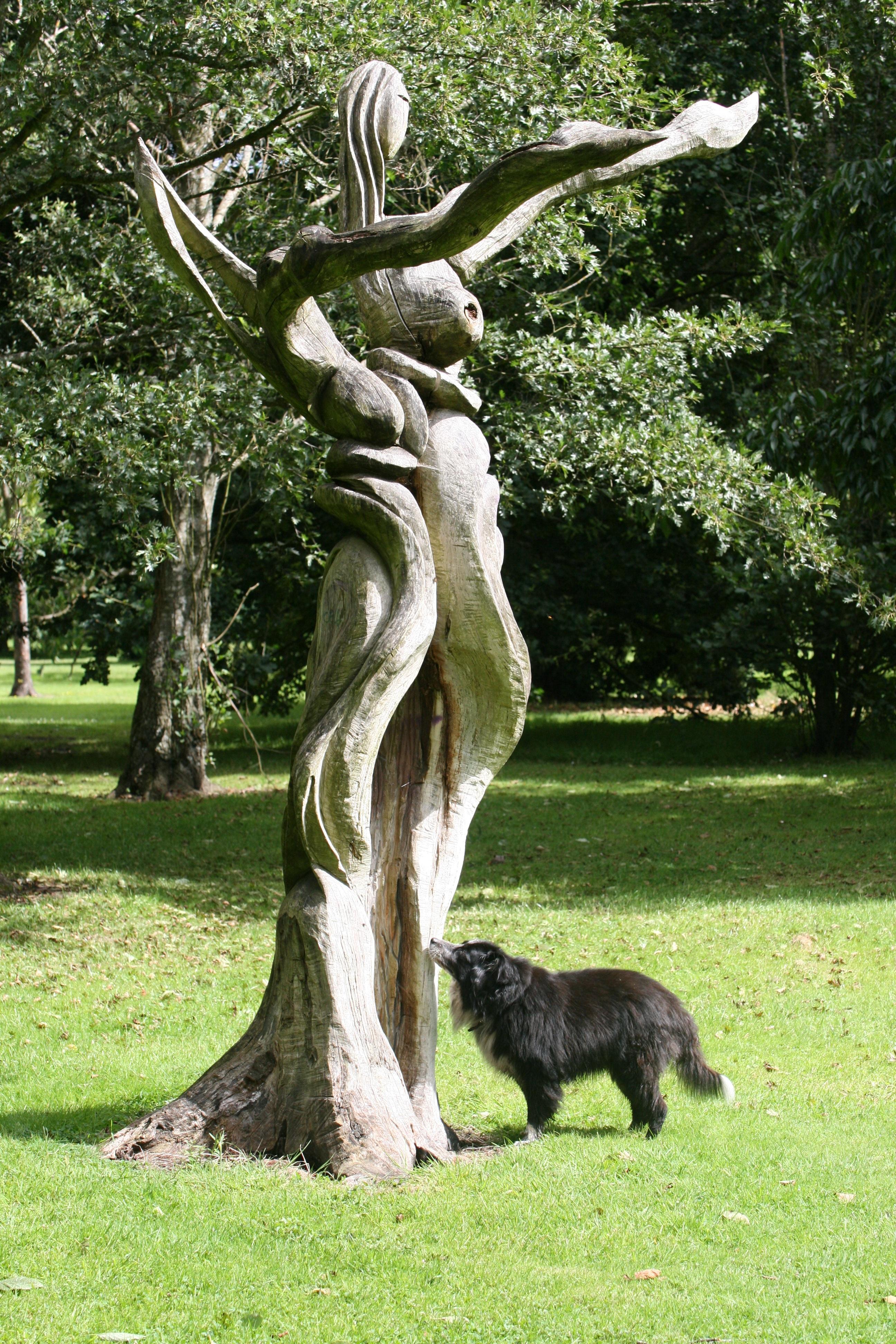 Kostenlose Foto Baum Wald Gras Draussen Holz Kofferraum Hund