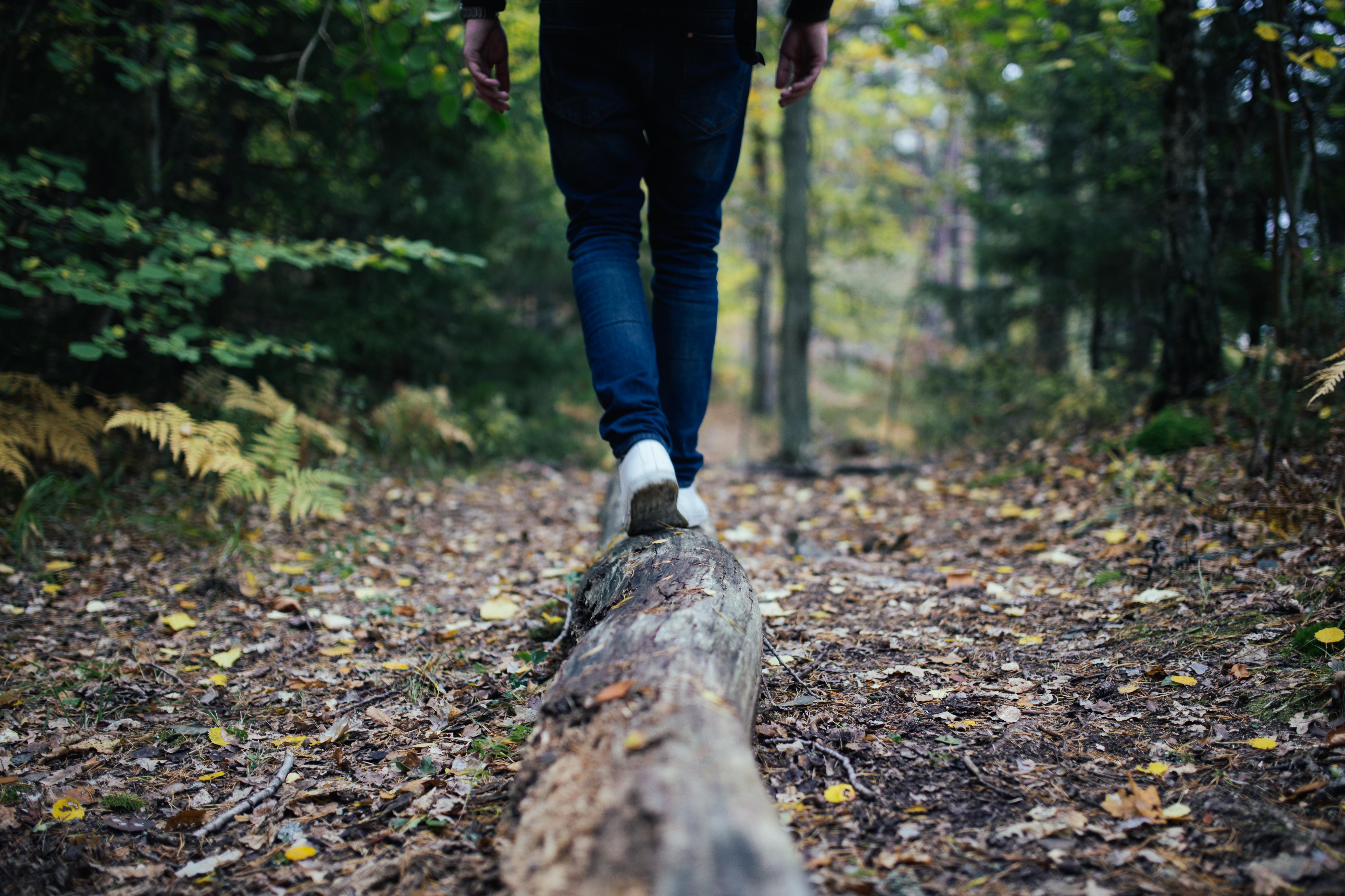 блендер картинки один человек в лесу только