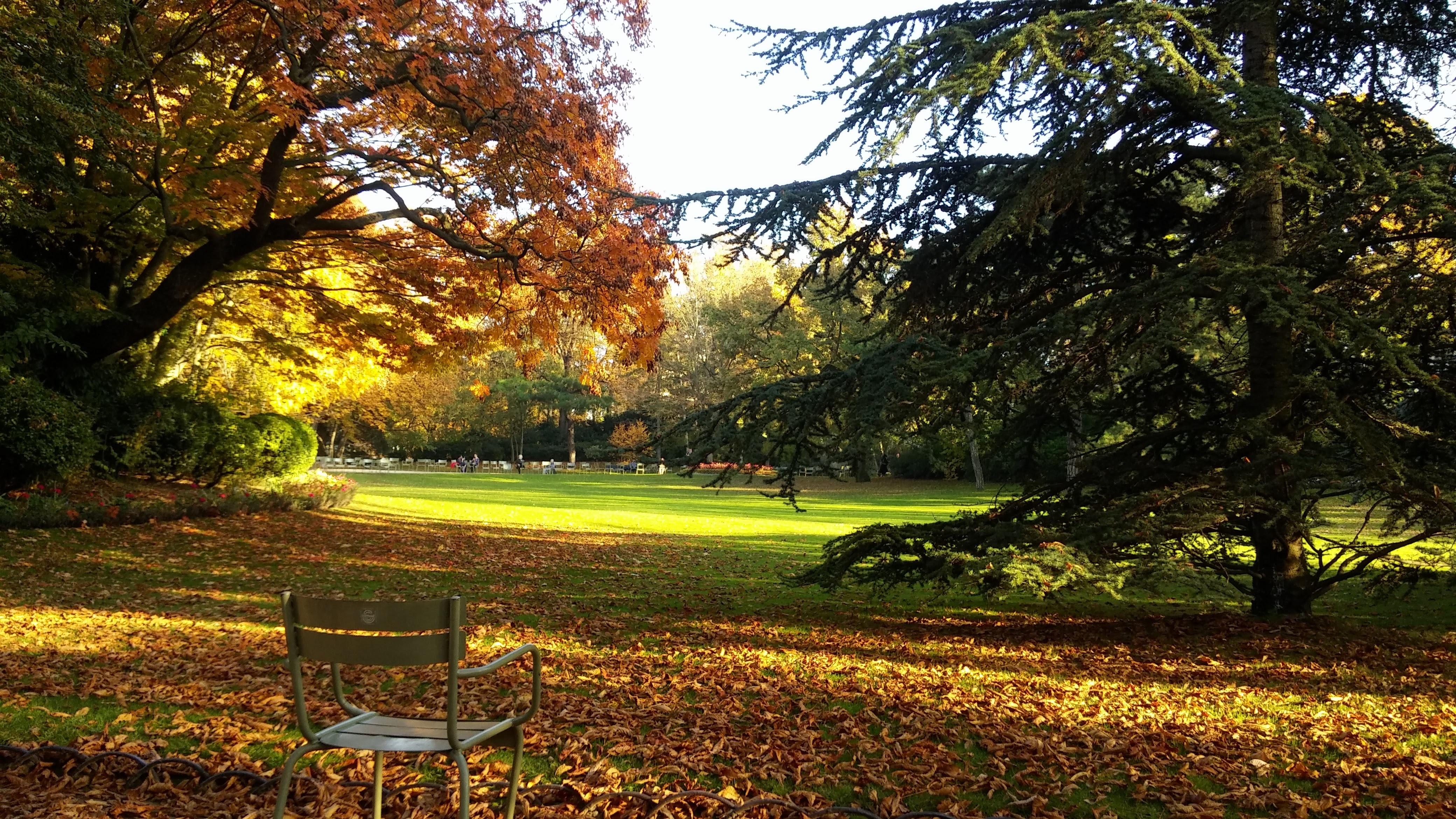 Images gratuites arbre la nature for t herbe plante for Arbres jardin du luxembourg