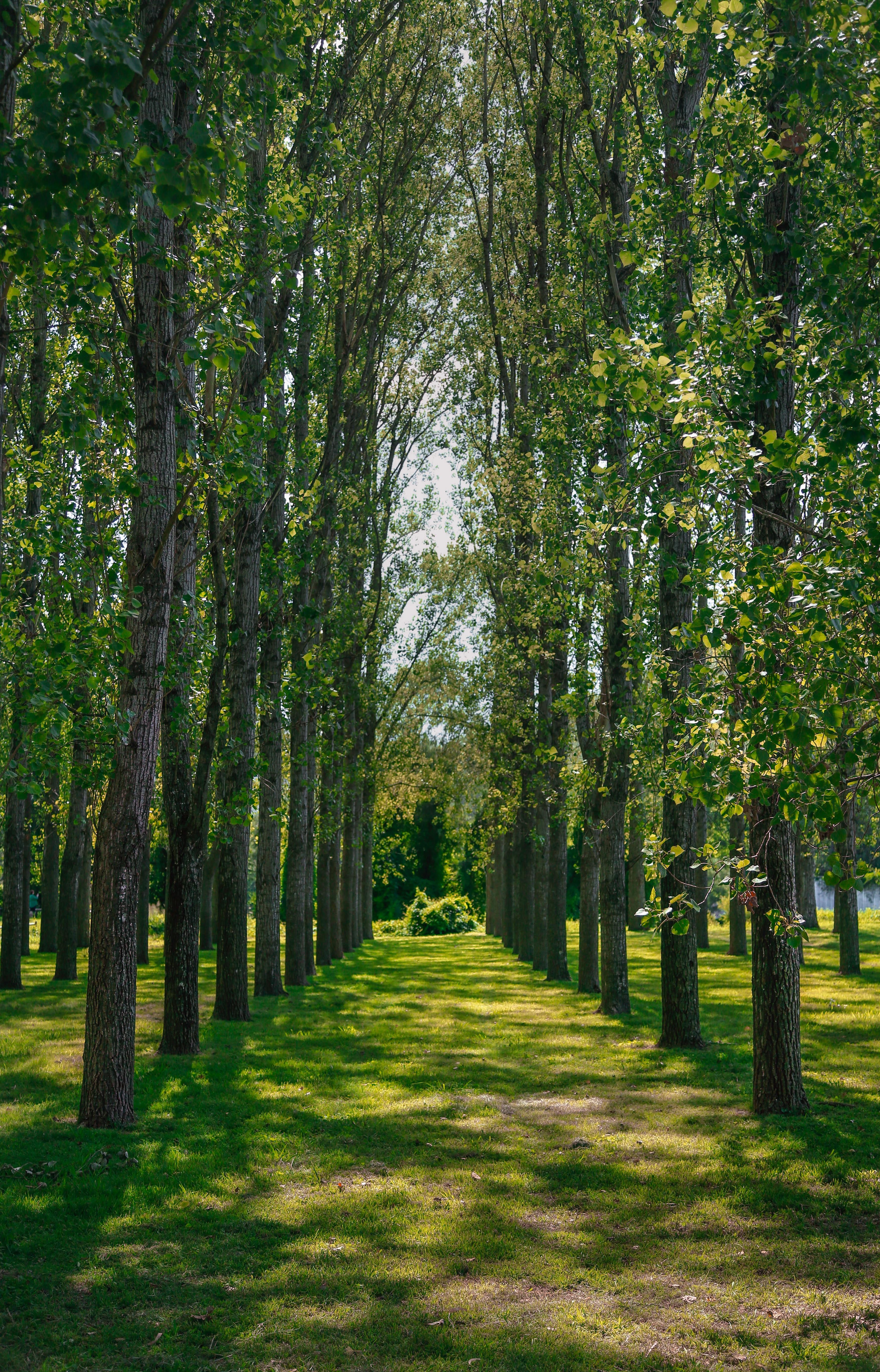 Fotos gratis : árbol, naturaleza, bosque, césped, planta
