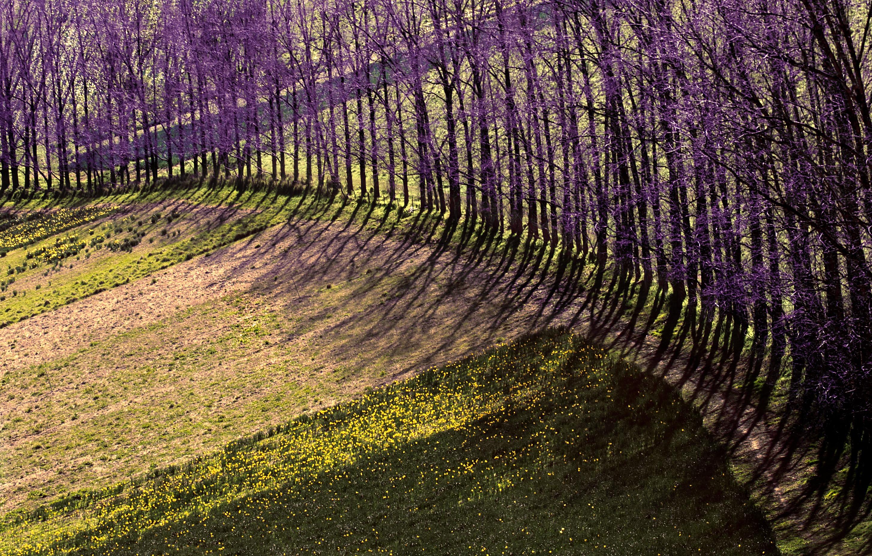 Fotos gratis rbol naturaleza bosque c sped planta for Arboles para plantar en verano